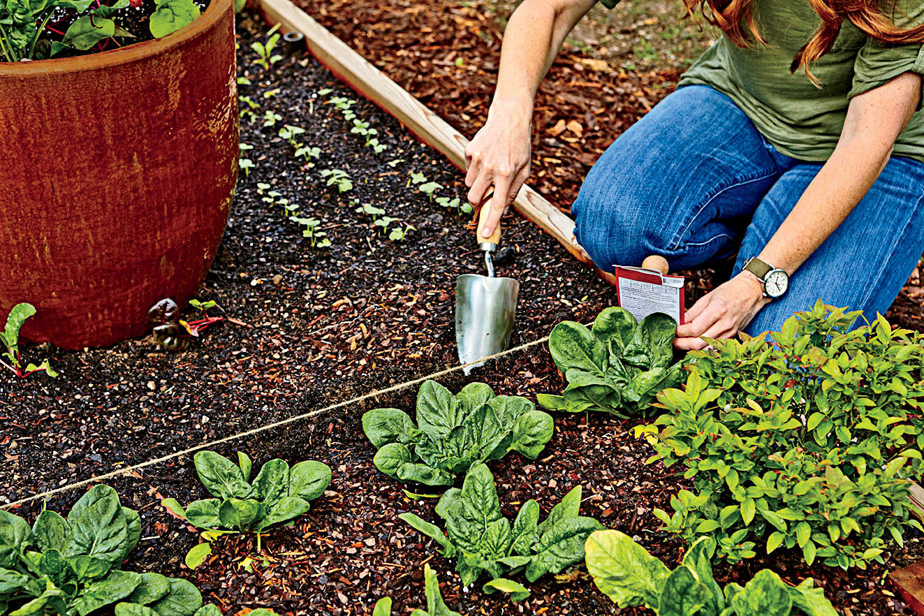 Now is the Perfect Time to Grow Glorious Greens