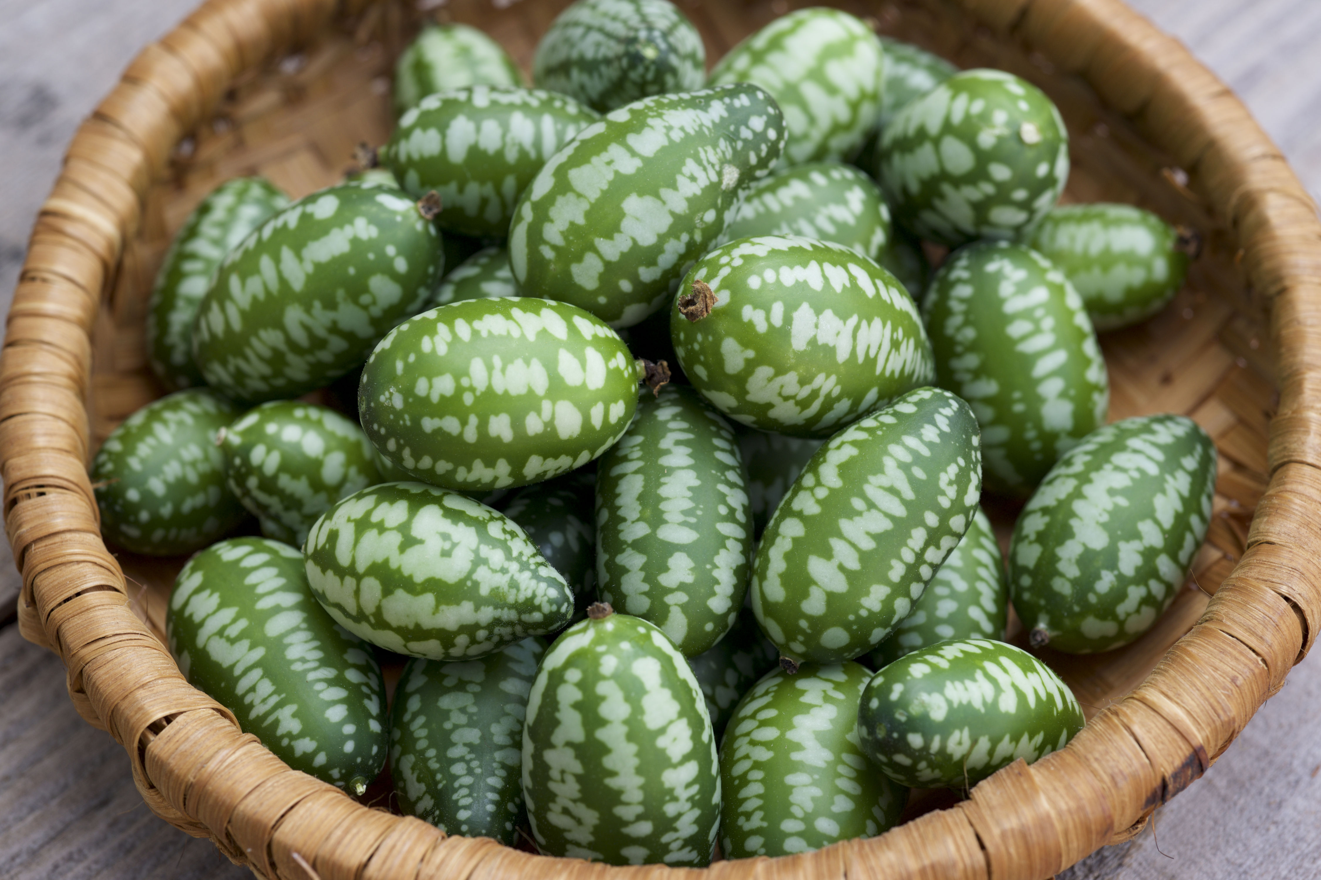 Why Southerners Should Grow Cucamelons This Year