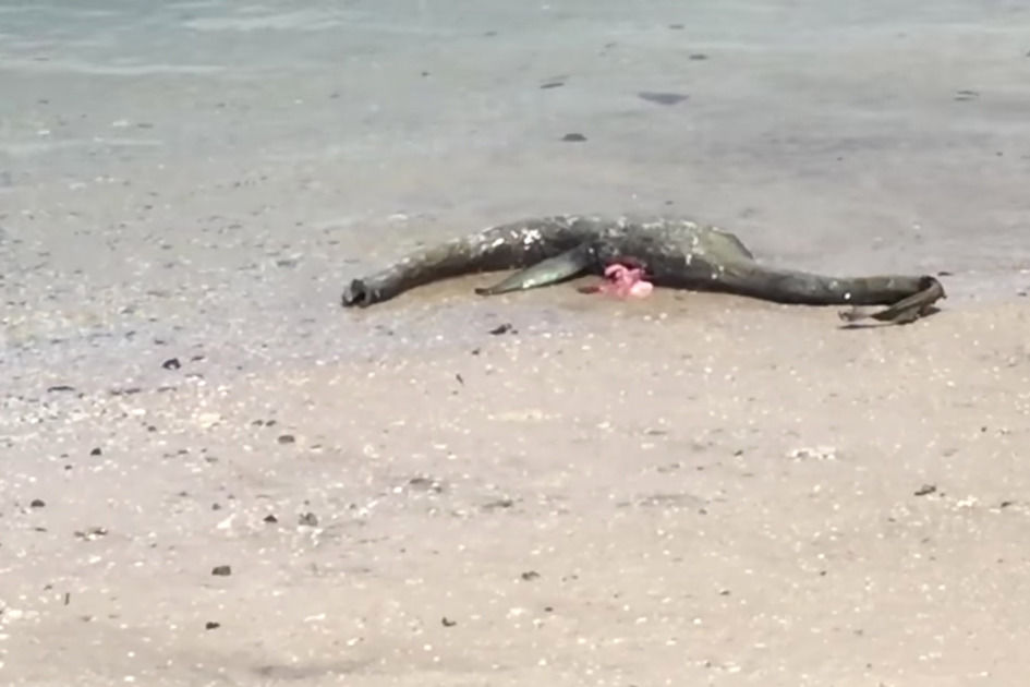 The 'Loch Ness Monster' of Georgia Washes Ashore on Southern U.S. Beach