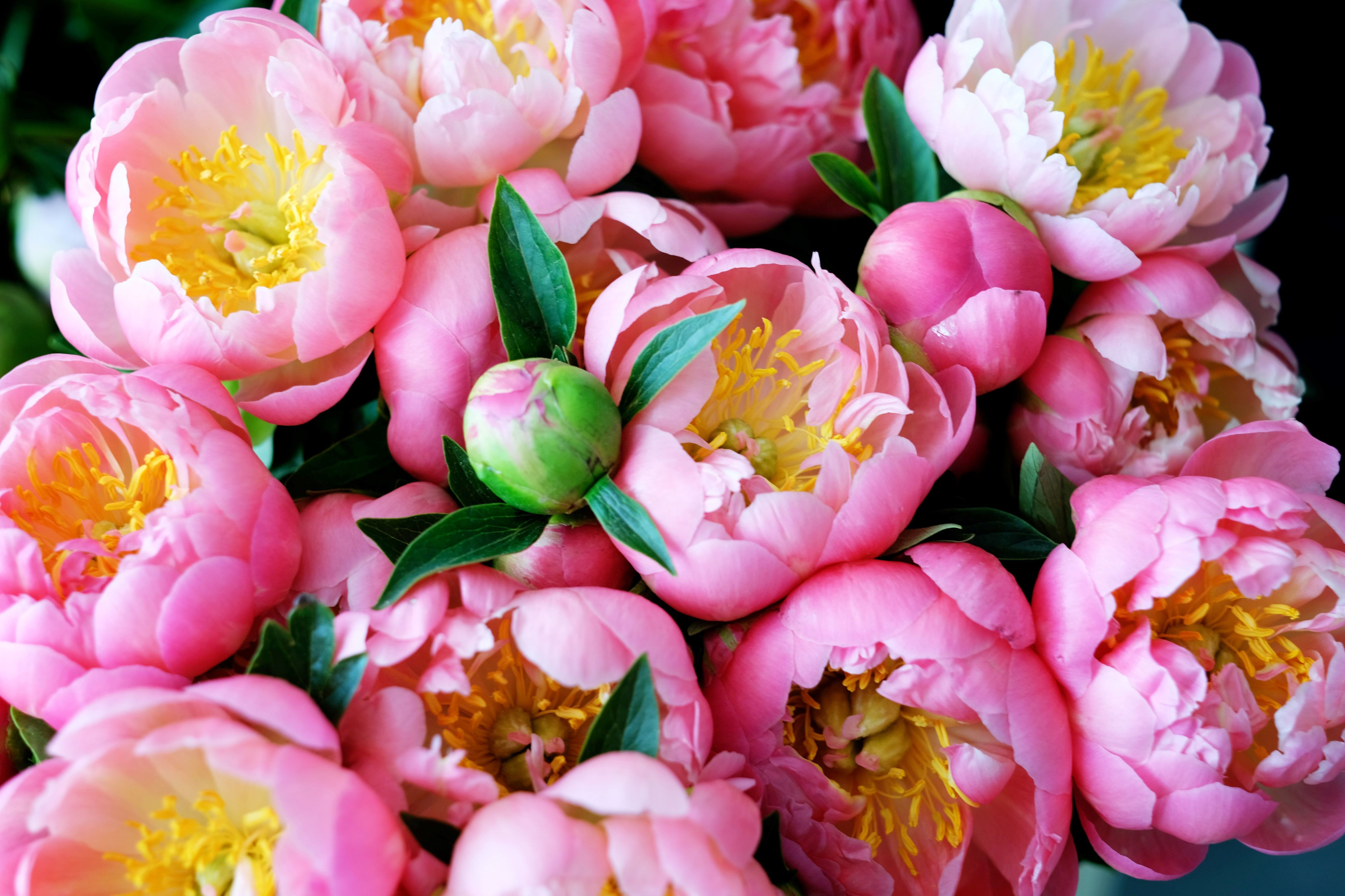 Facts About Flowers: Peony Edition