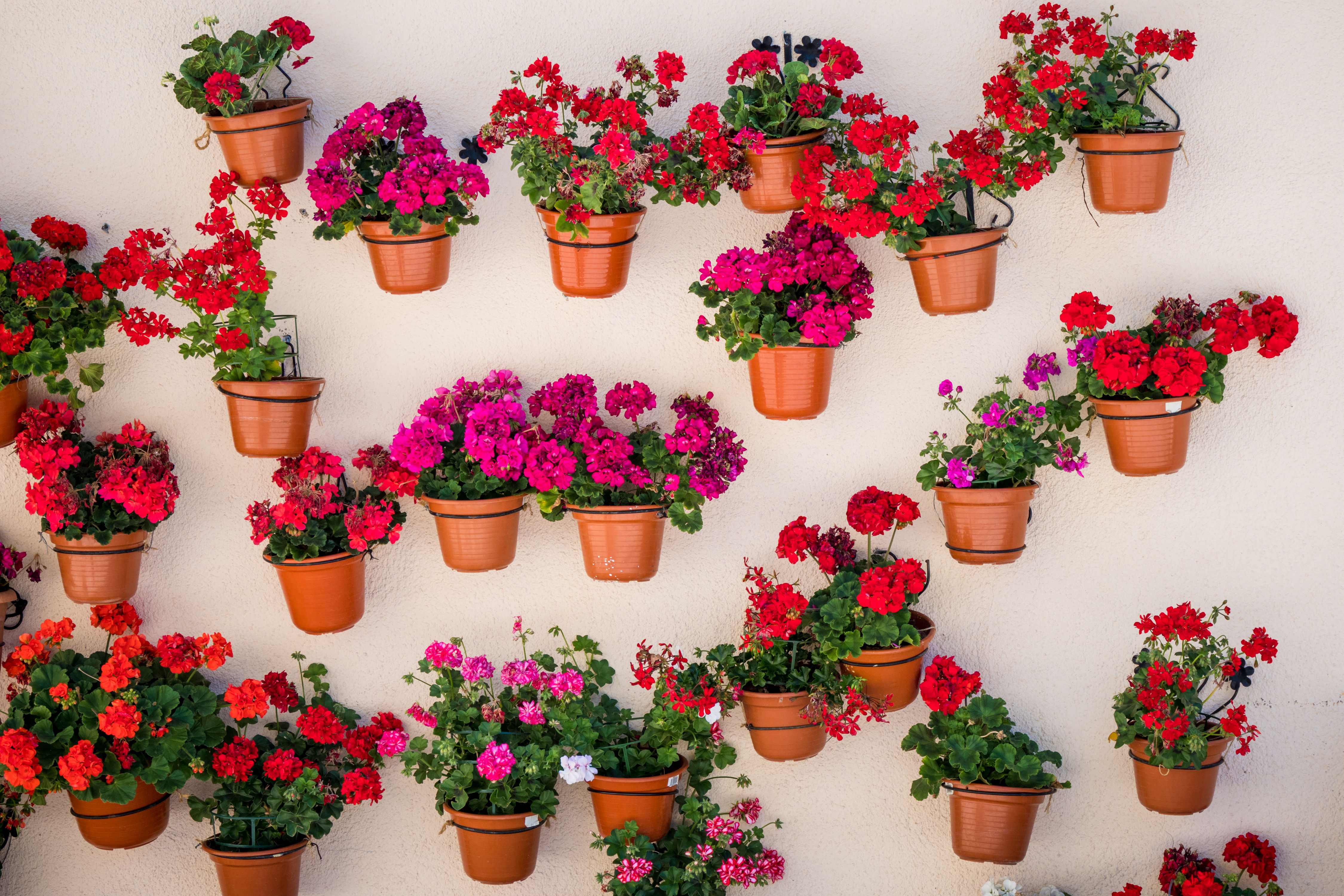 Here's Why You Should Put a Coffee Filter in Each of Your Flower Pots
