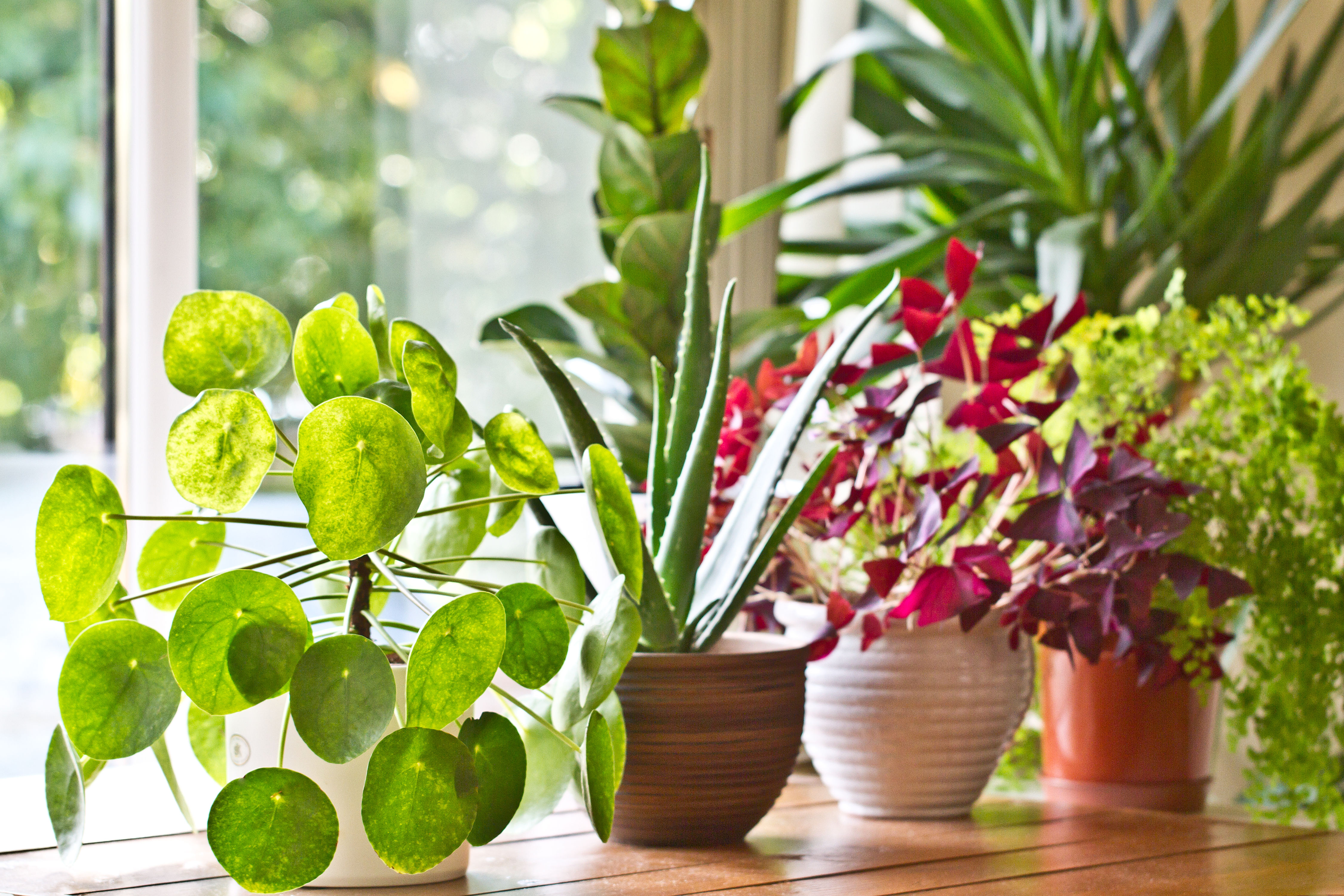 Here's Why You Should Use the Ice Cube Method With Your Houseplants