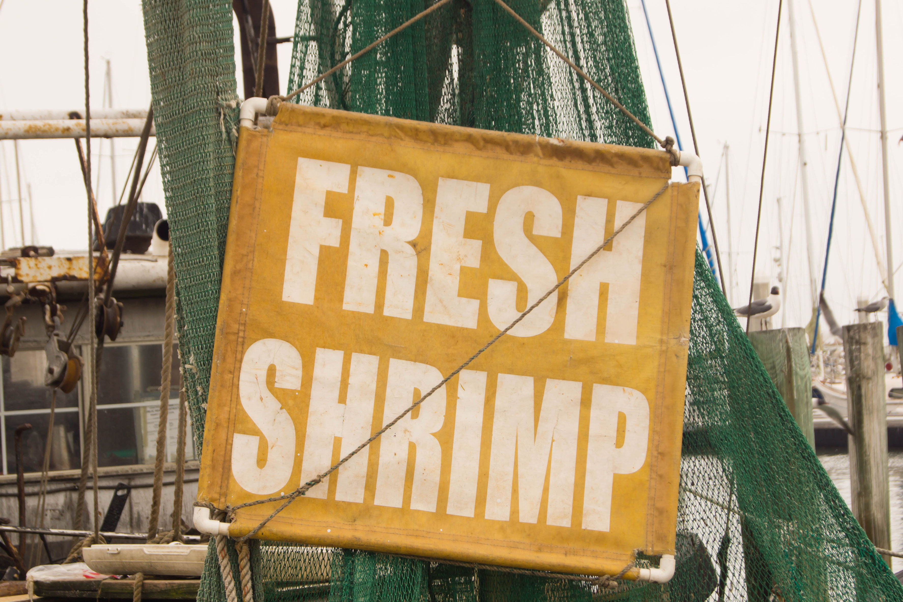 After an Extra-Long Delay, South Carolina Shrimp Season Expected to Open This Week