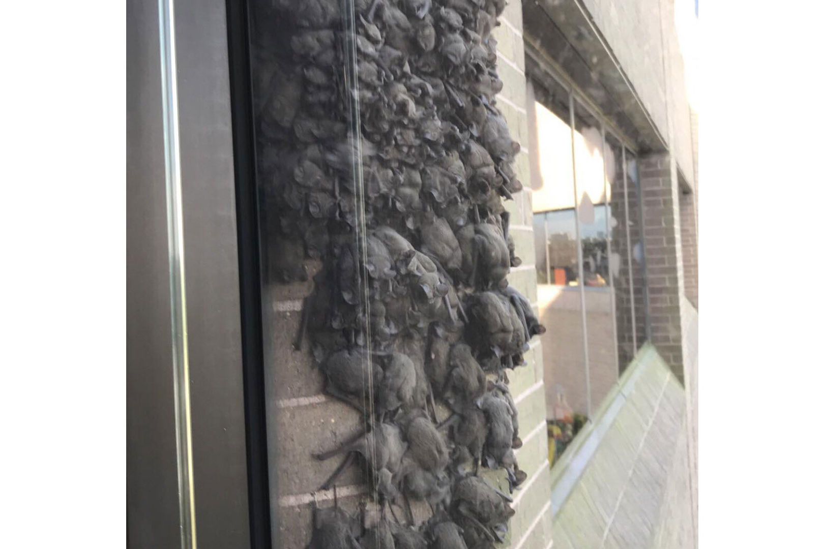 Nobody Knows Why Hundreds of Bats Keep Visiting This Houston Office Building