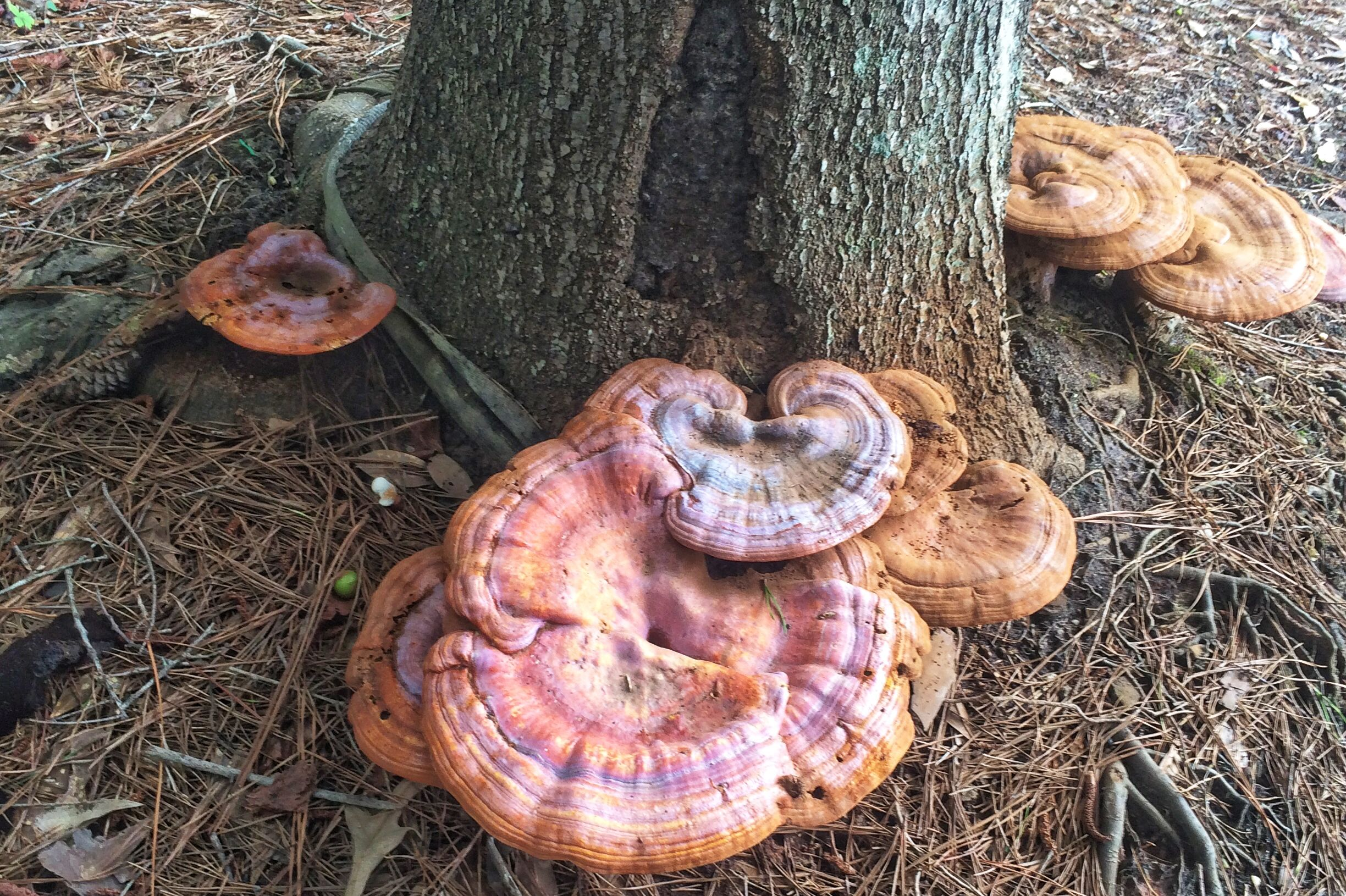 Mushrooms On Trees Are Bad News