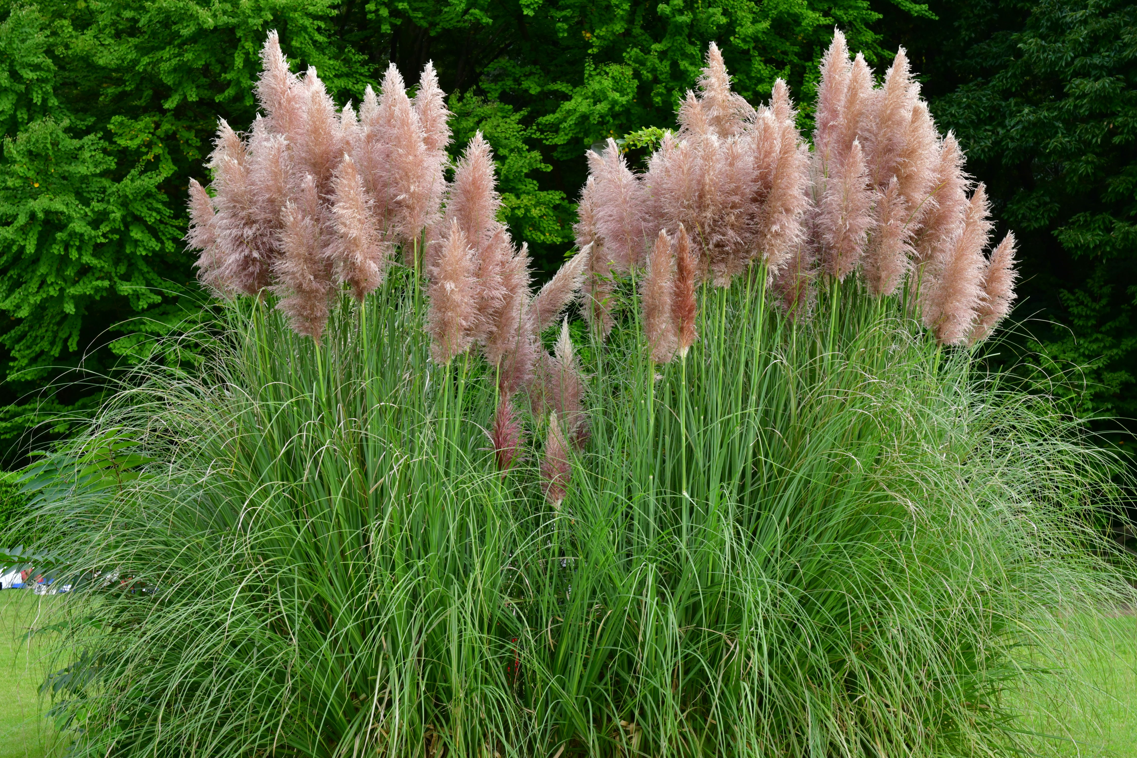 Meet Pampas Grass, the Fluffy Weed Taking Home Design by Storm