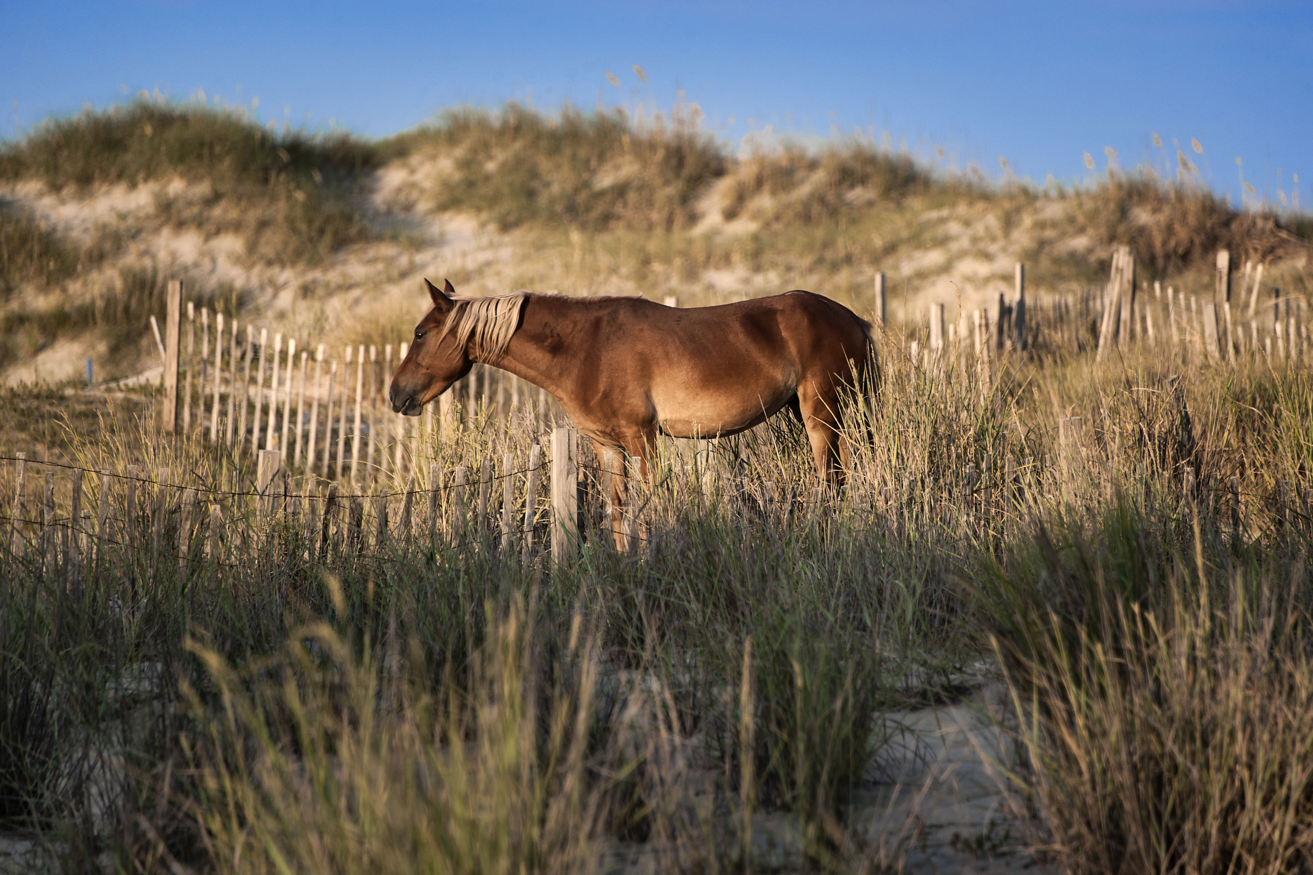 Guidelines for Visiting the Southeast's Beautiful Wild Horses