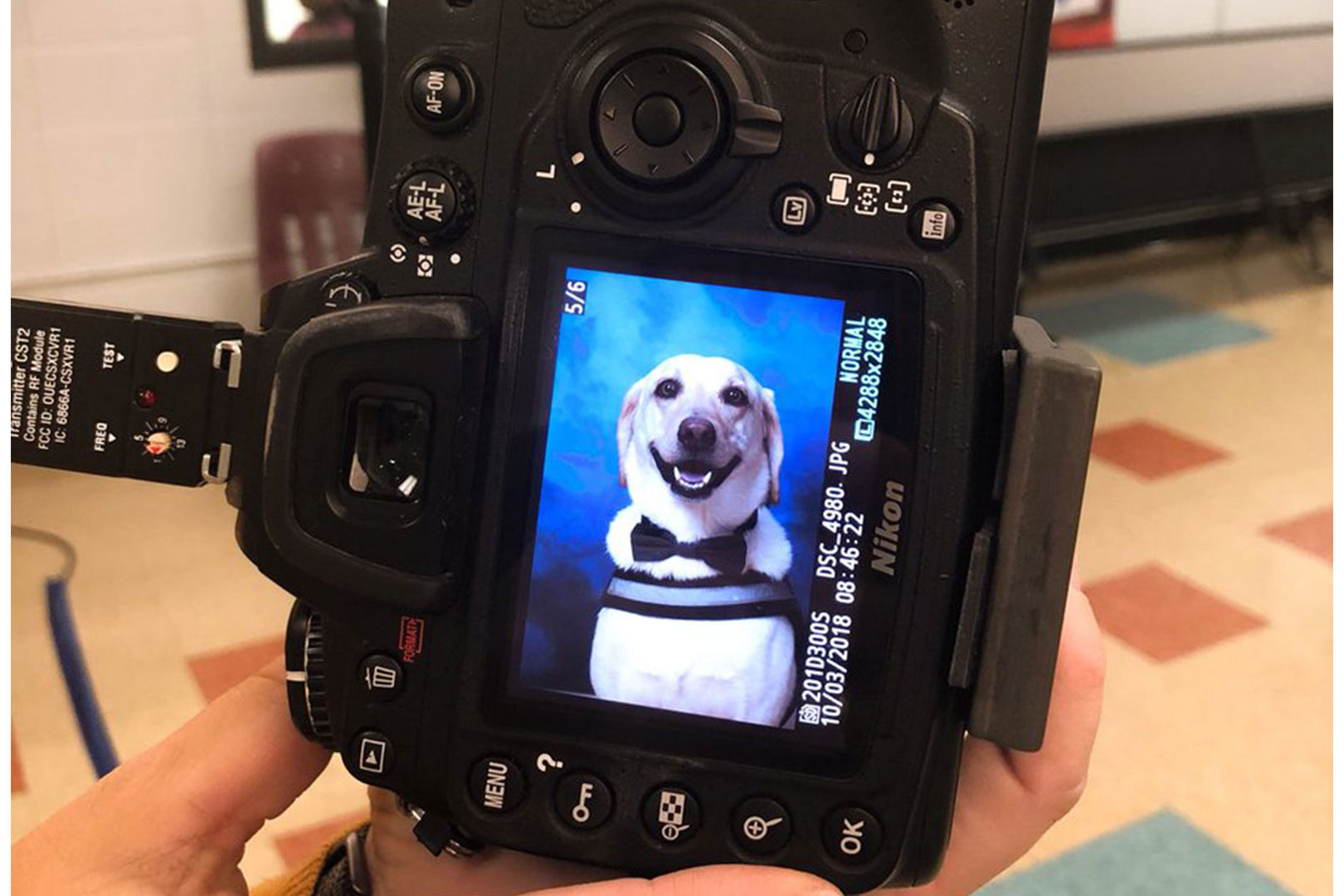 Louisiana Service Dog Wears Bow Tie to School Picture Day, Looks Absolutely Fetching