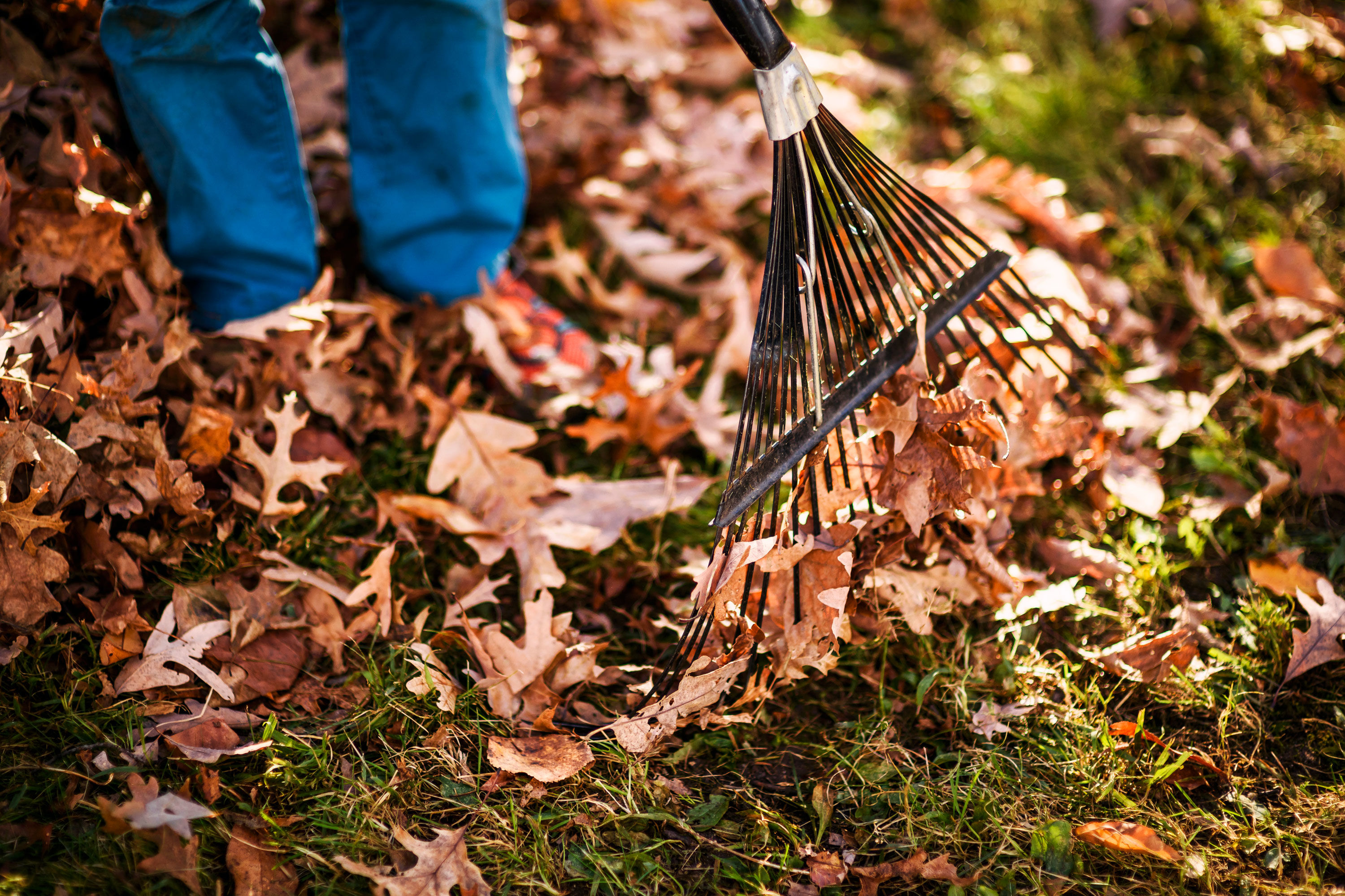 Does Raking Leaves Make You A Bad Person?