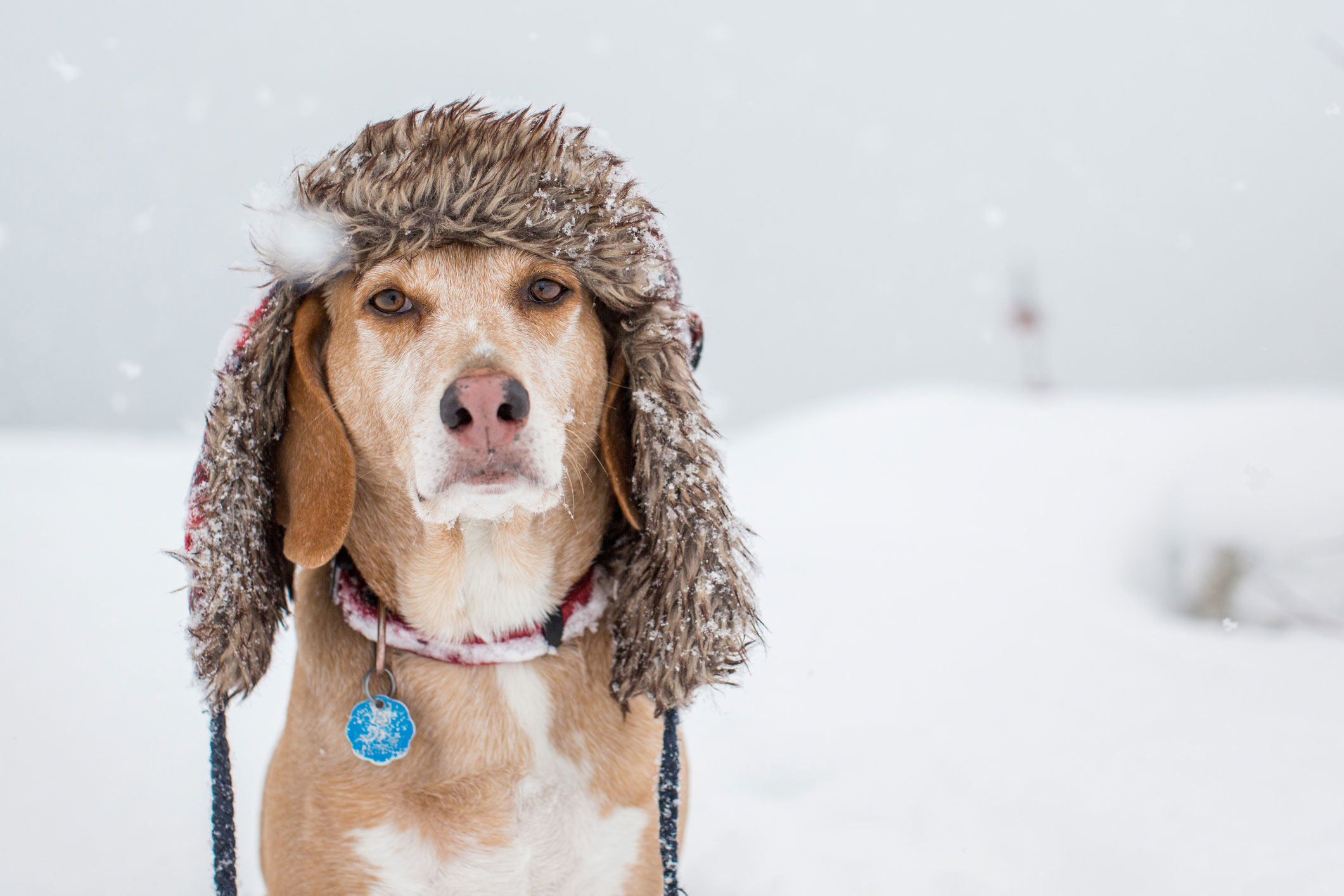 Why Your Dog Might Need a Heated Doghouse