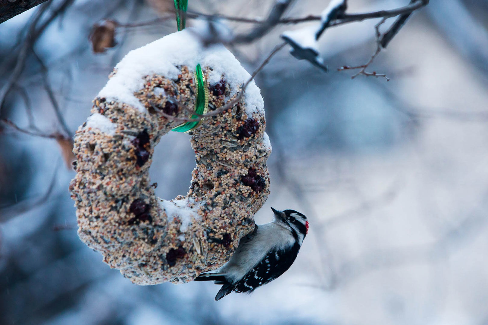 Treat Your Local Birds to Some Holiday Home-Cooking with This Festive DIY Wreath
