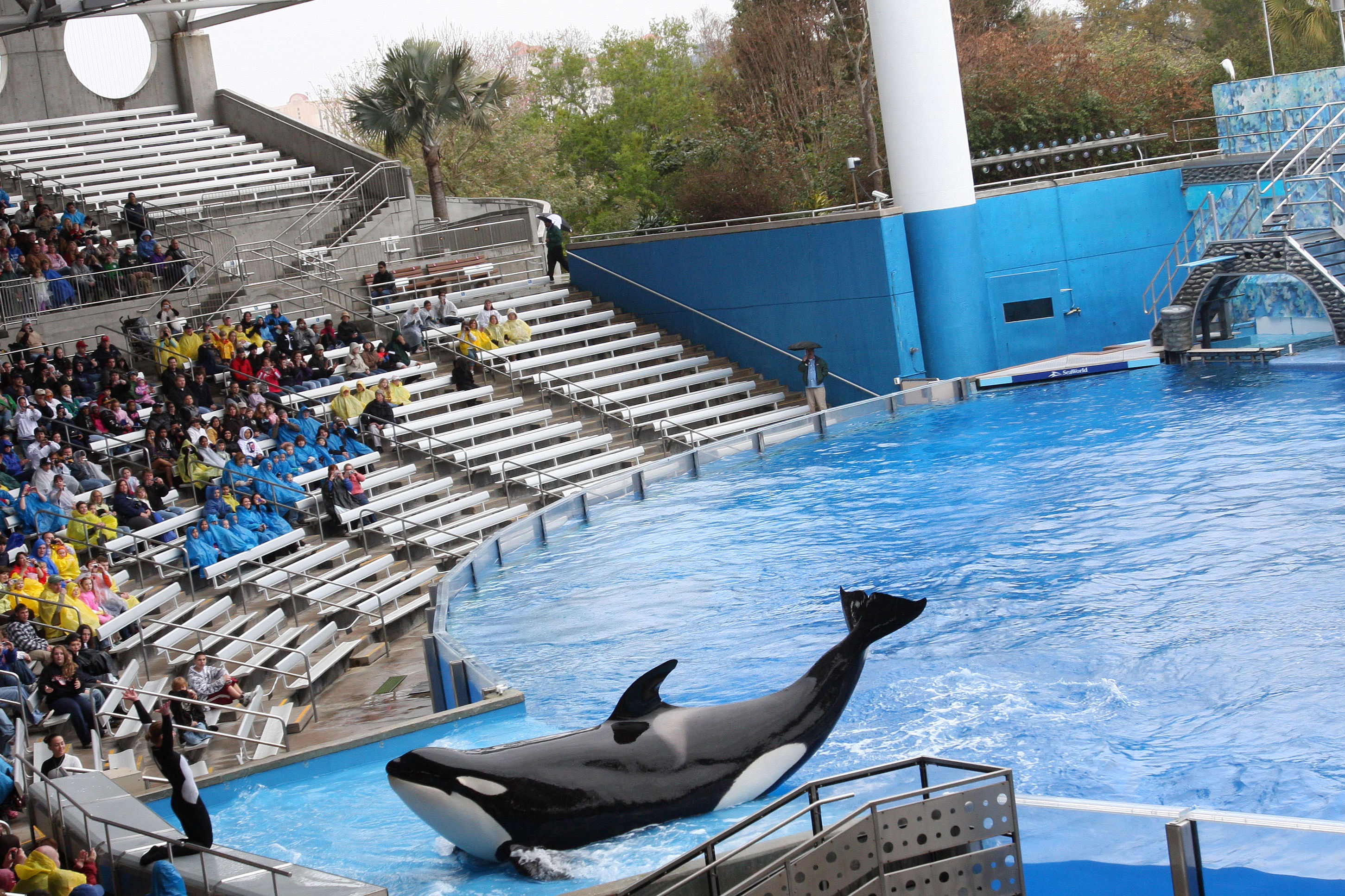 SeaWorld Orlando Announces the Mysterious Death of 30-Year-Old Orca Kayla