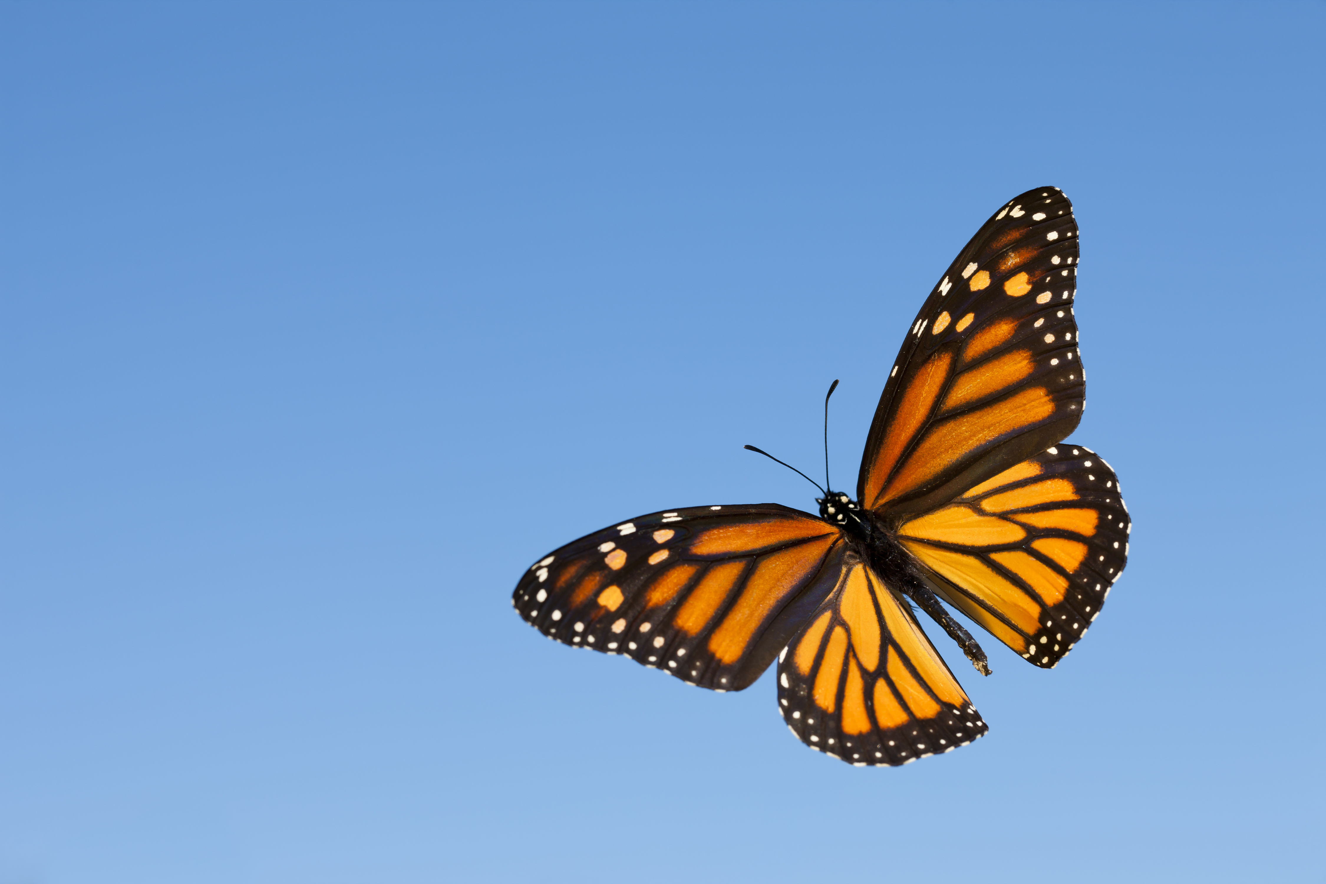Experts Predict 300 Million Monarch Butterflies Will Journey Through Texas This Season