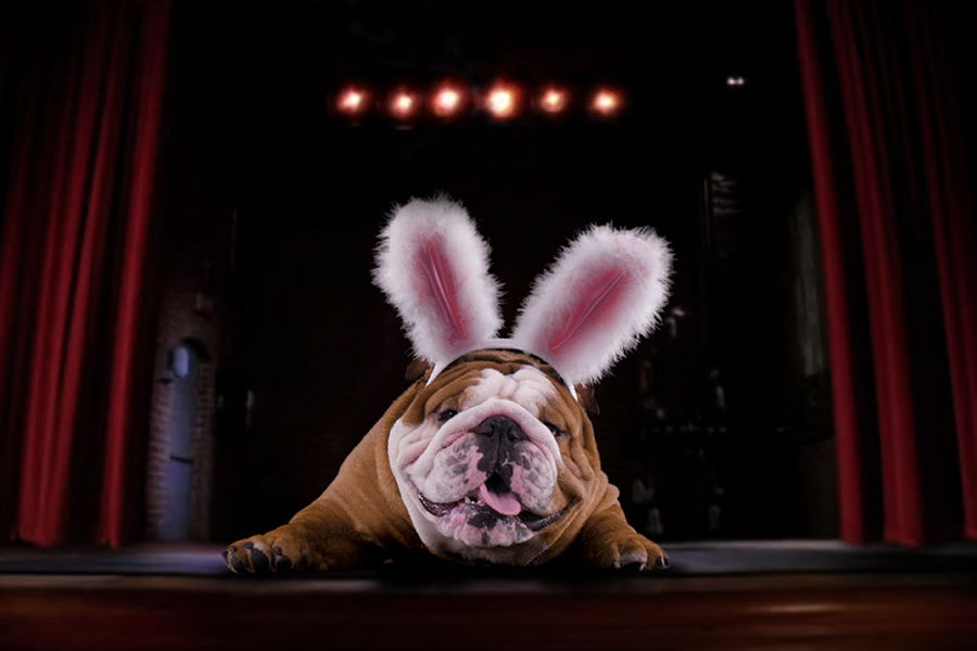 Cadbury's <i>Clucking Bunny</i> Commercial Starring Henri the Bulldog is Here