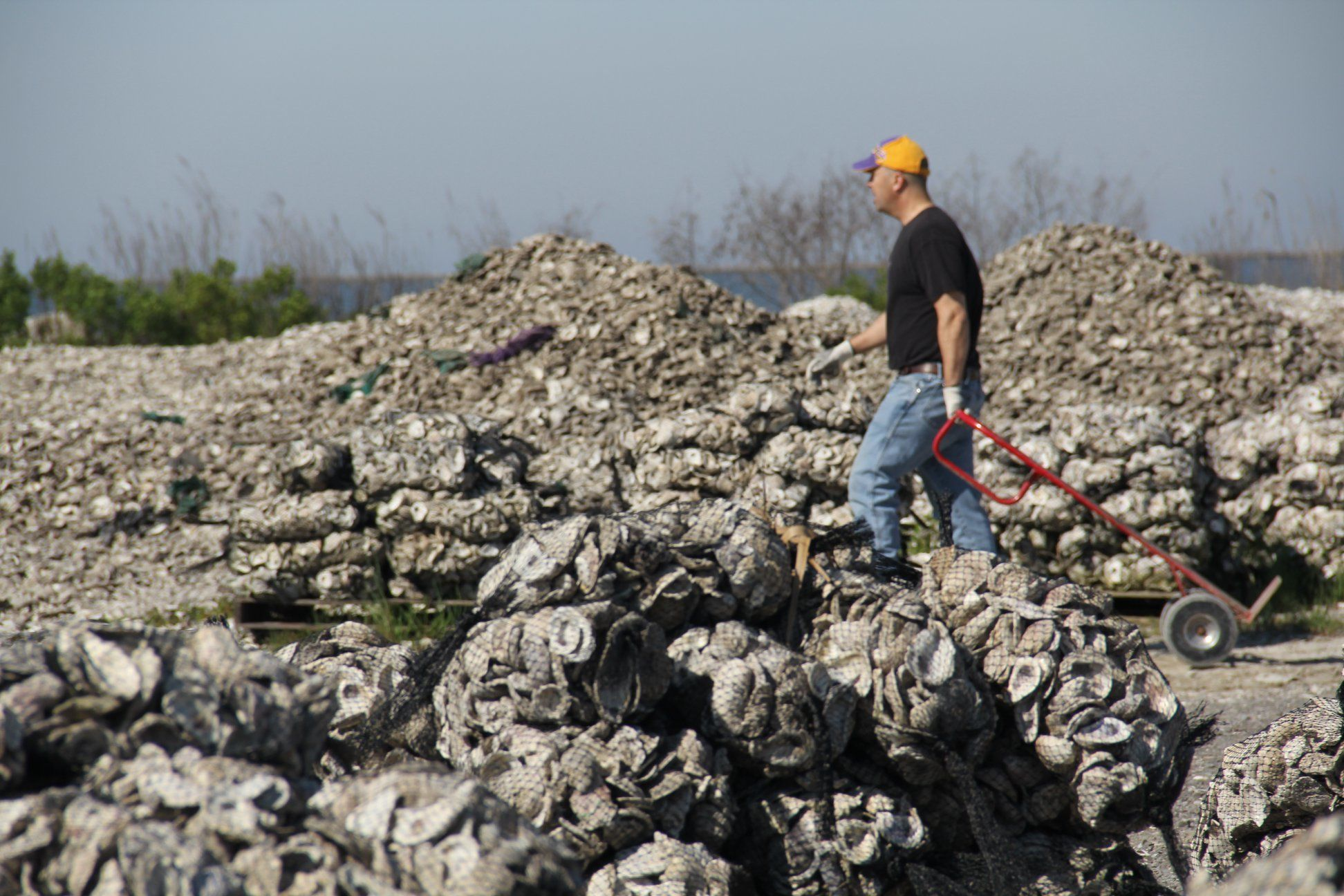 Here's How Louisiana Is Using Oyster Shells to Preserve a Sacred Piece of Shoreline