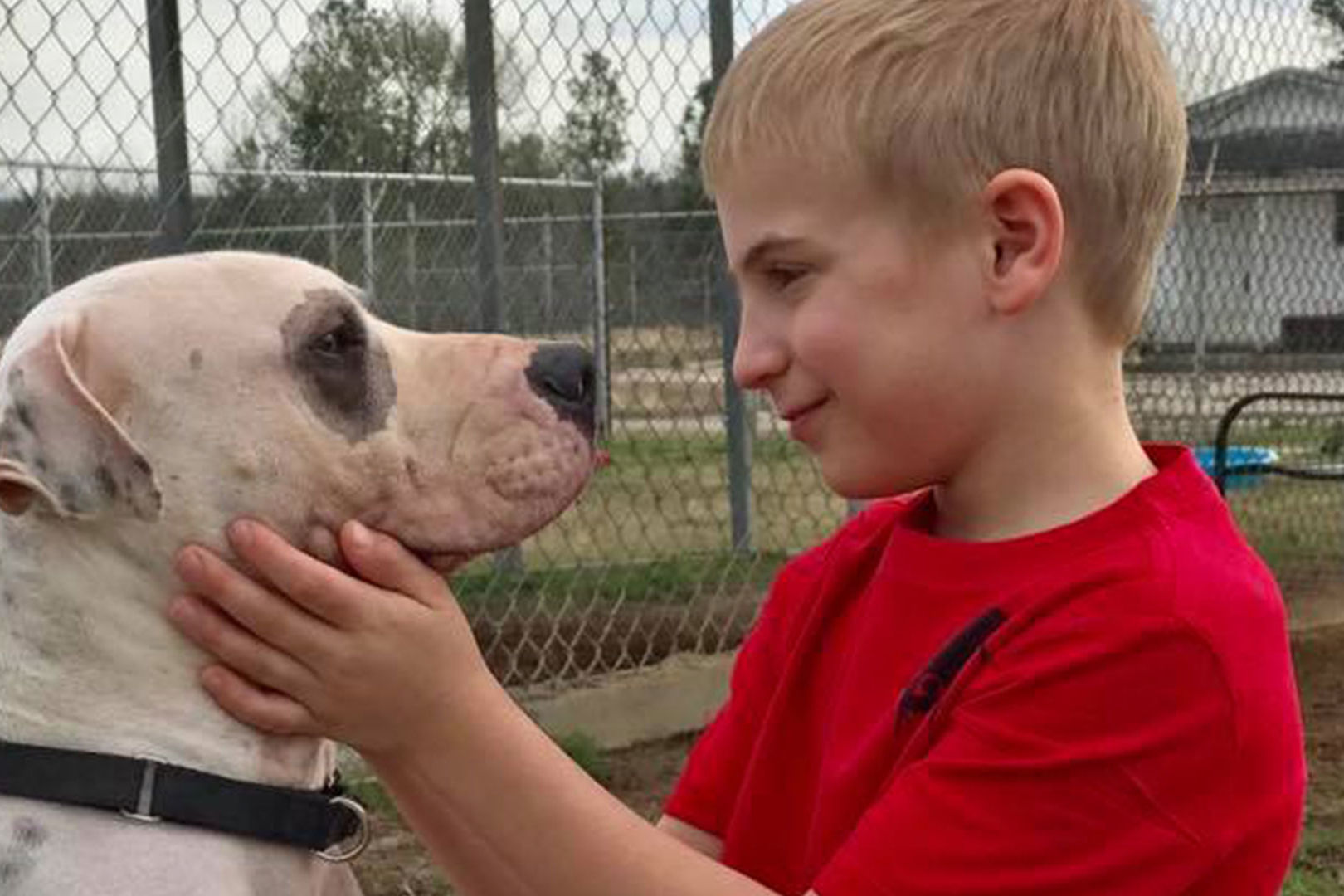WATCH: 7-Year-Old Boy Has Helped Rescue More Than 1,400 Dogs from Southern Kill Shelters