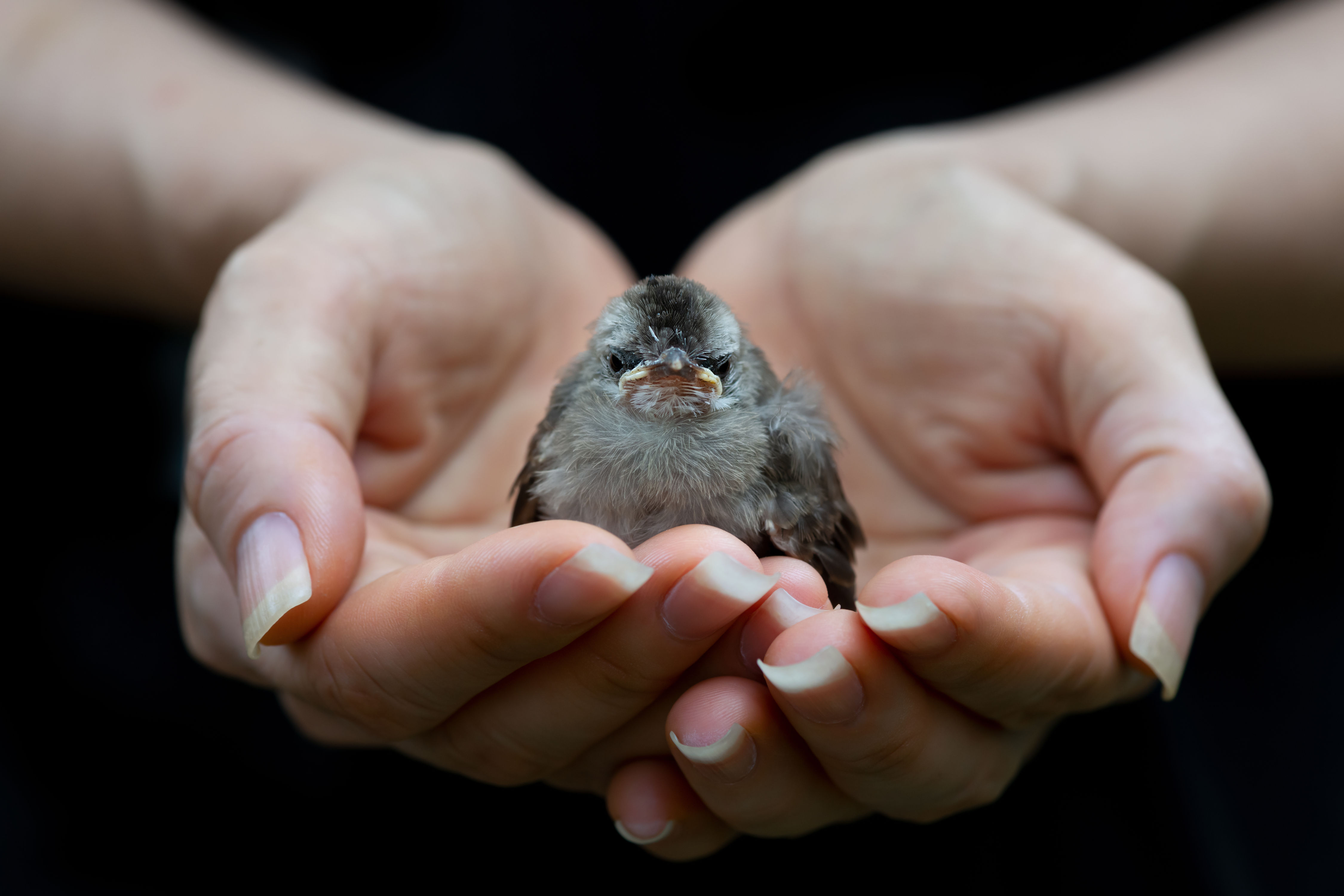 WATCH: How to Know if a Baby Bird Needs Rescuing