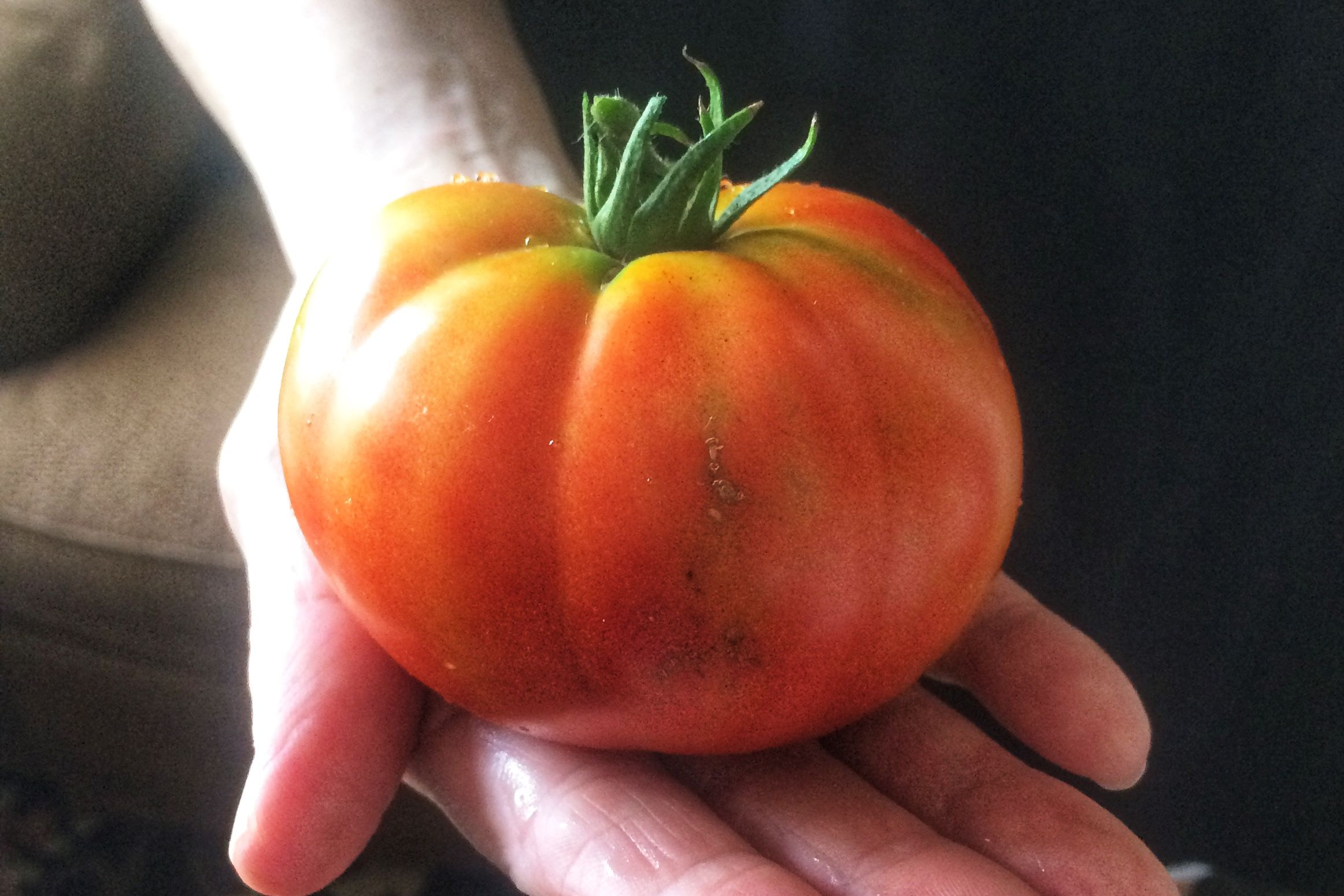 Judy's First Tomato