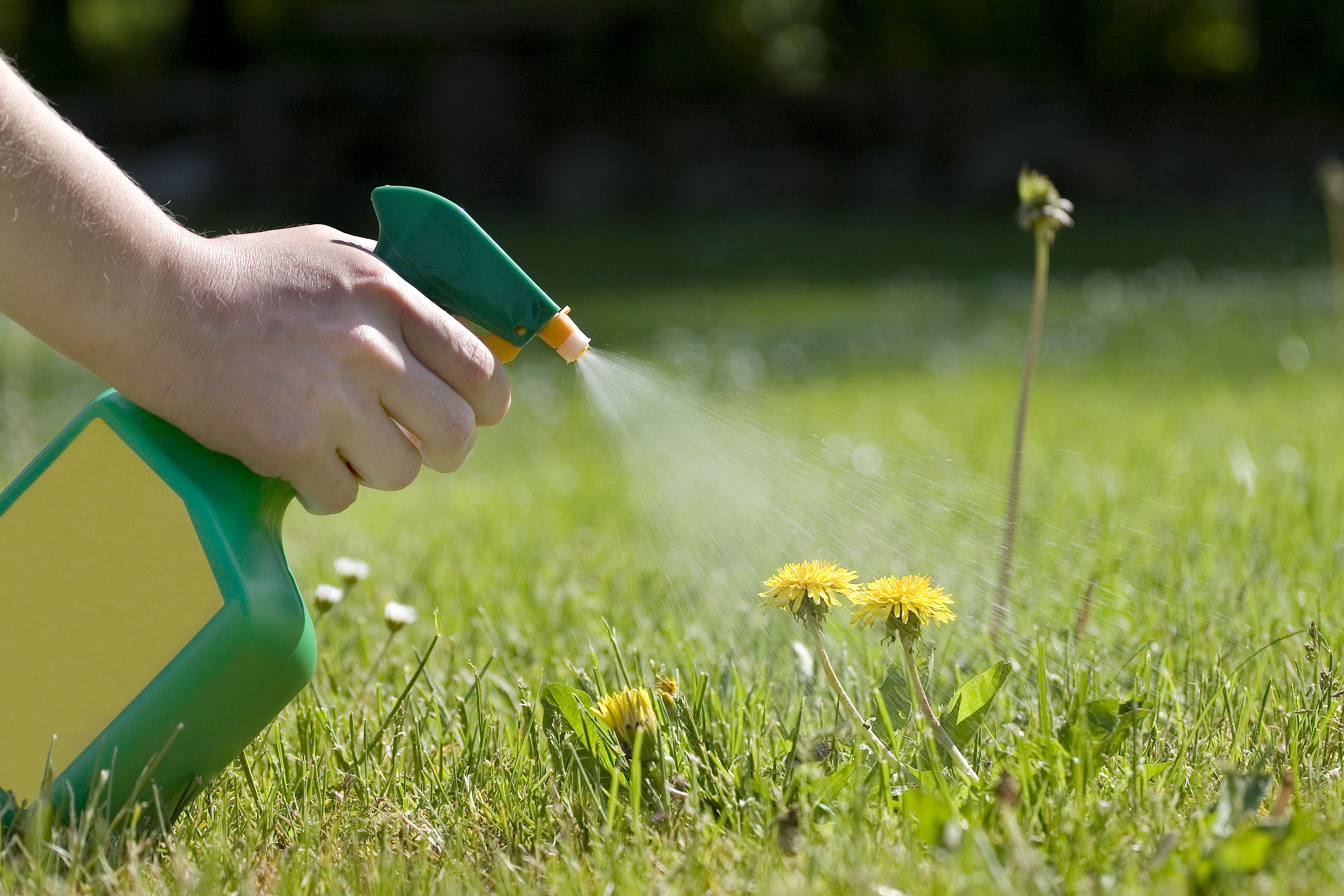 Surprise! Your Vinegar Weed-Killer Is GMO