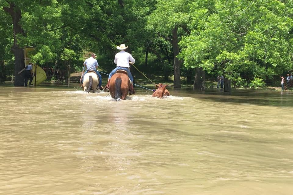 WATCH: Oklahoma Cowboys Join Forces to Rescue Livestock from Historic Flooding