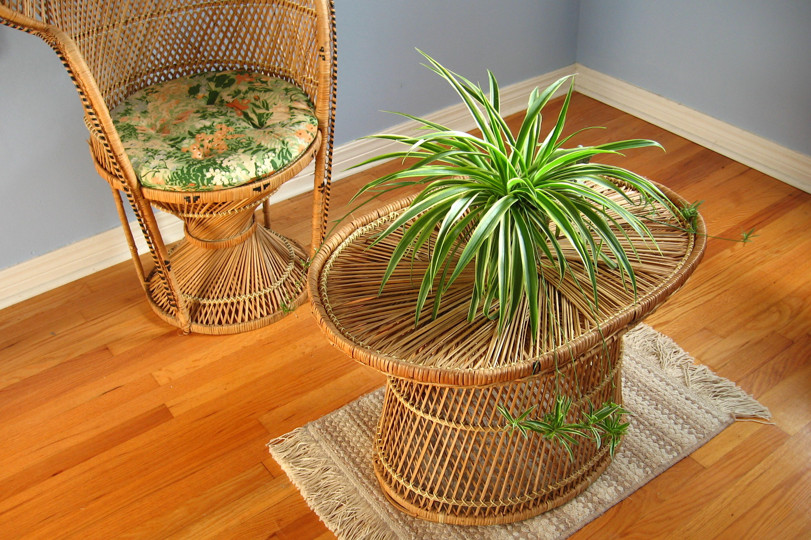 How to Grow a Spider Plant