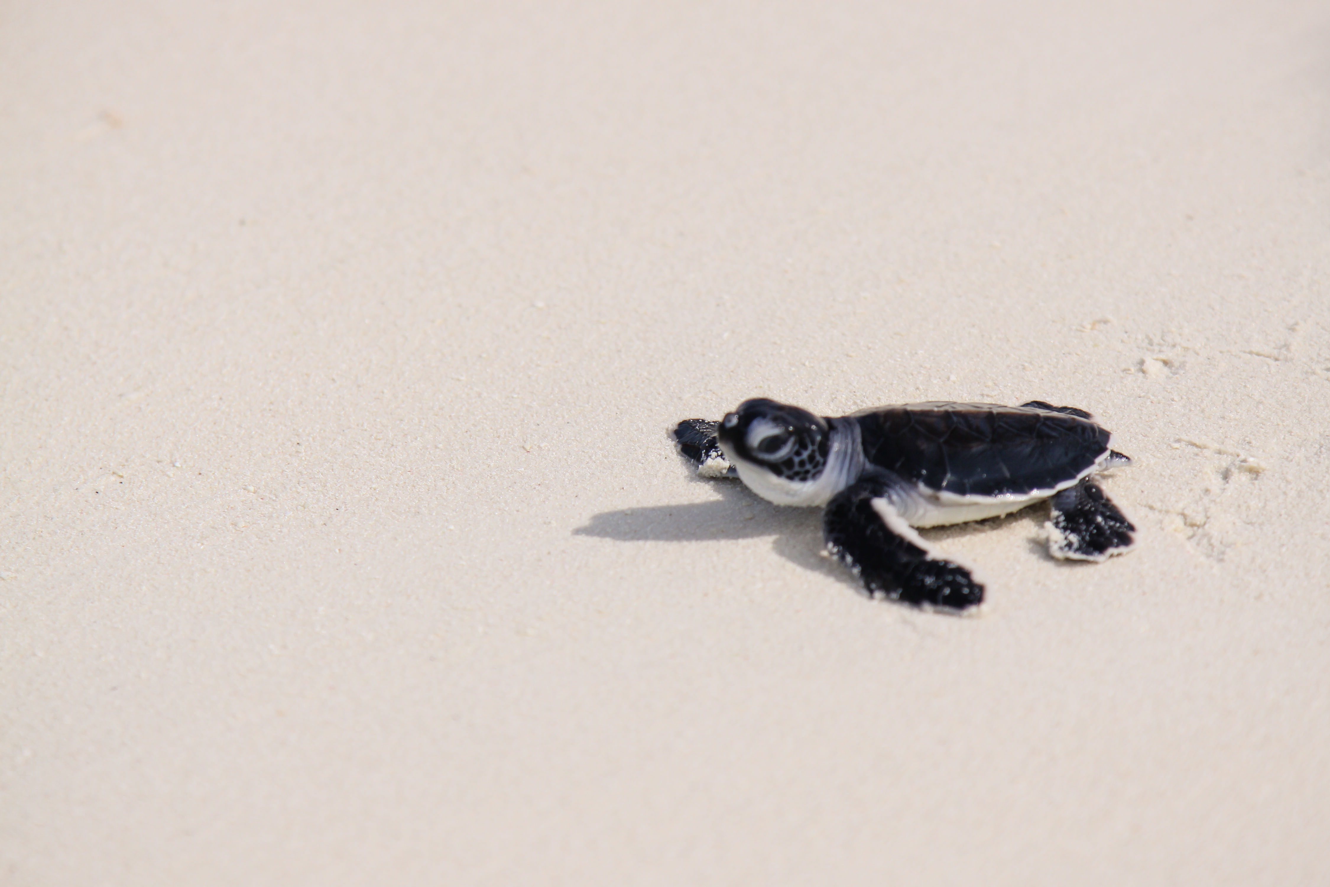 "Here's Why Scientists Are ""Fingerprinting"" Baby Sea Turtles"