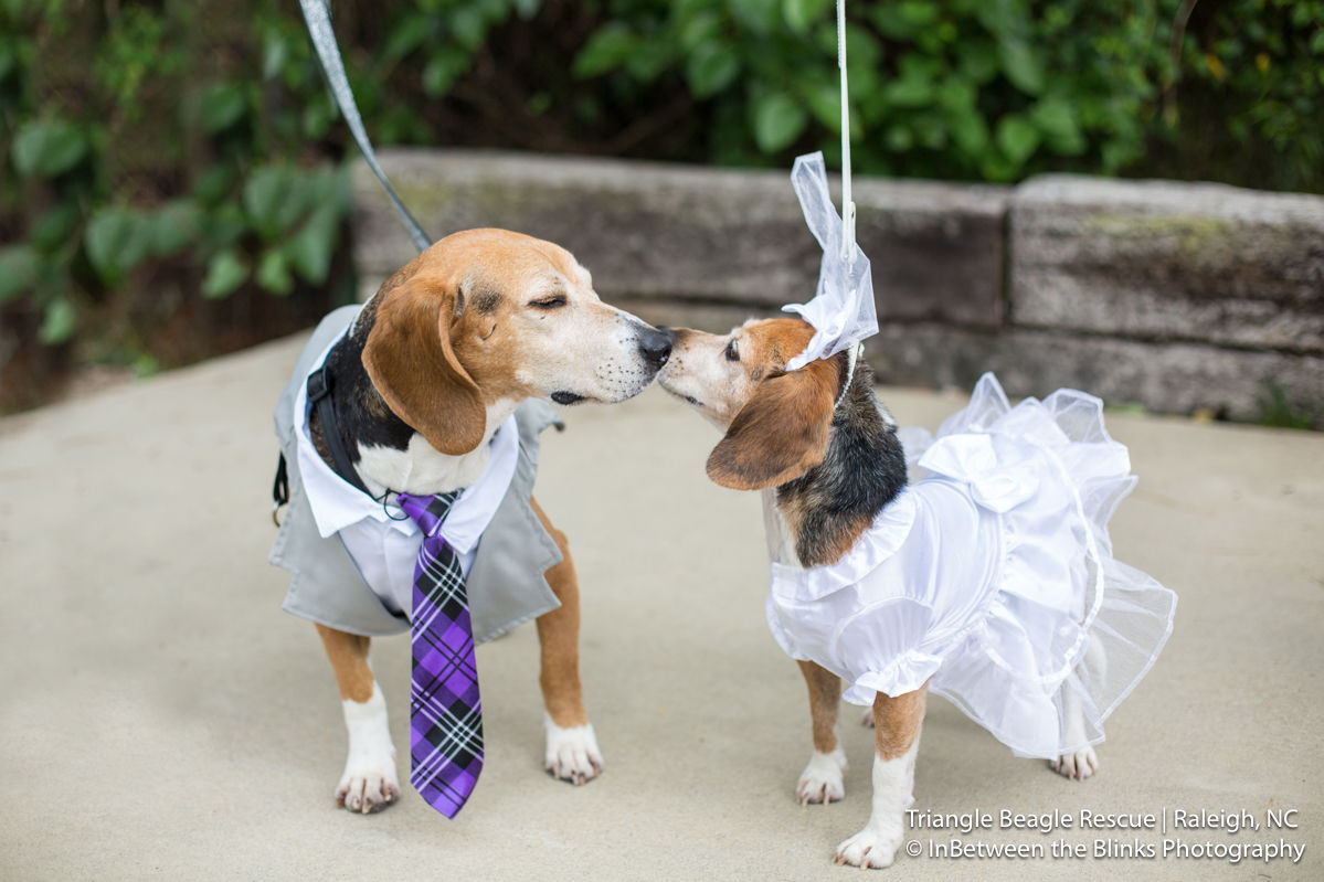 WATCH: Hurricane Florence Rescue Pup with Cancer Checks Marrying His Best Friend off Bucket List