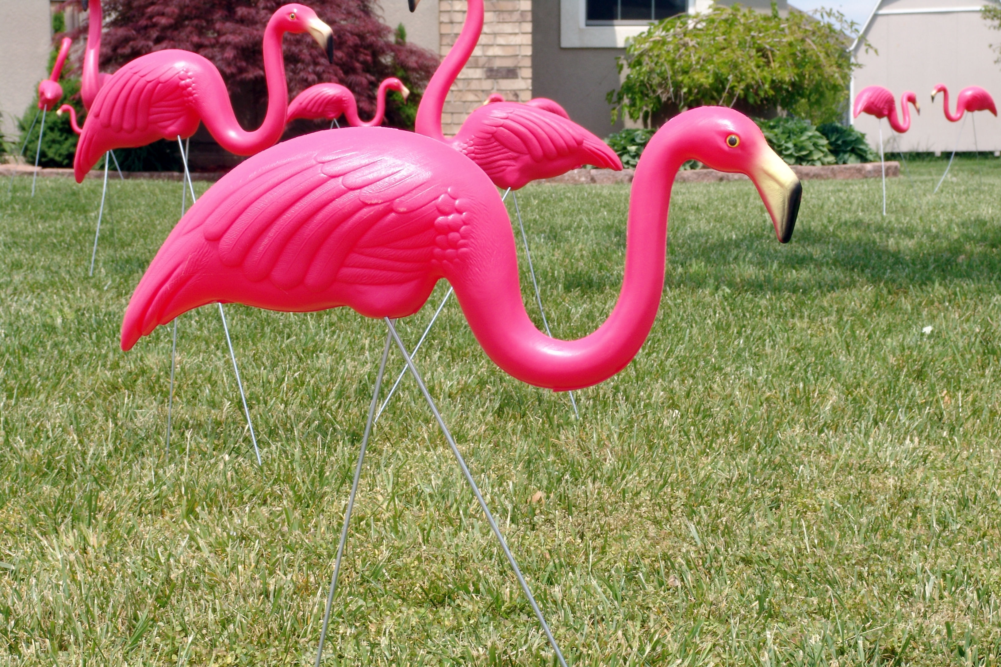 WATCH: The Internet Is Obsessed with These Photos of the Man Who Invented the Plastic Flamingo—and We Are Too