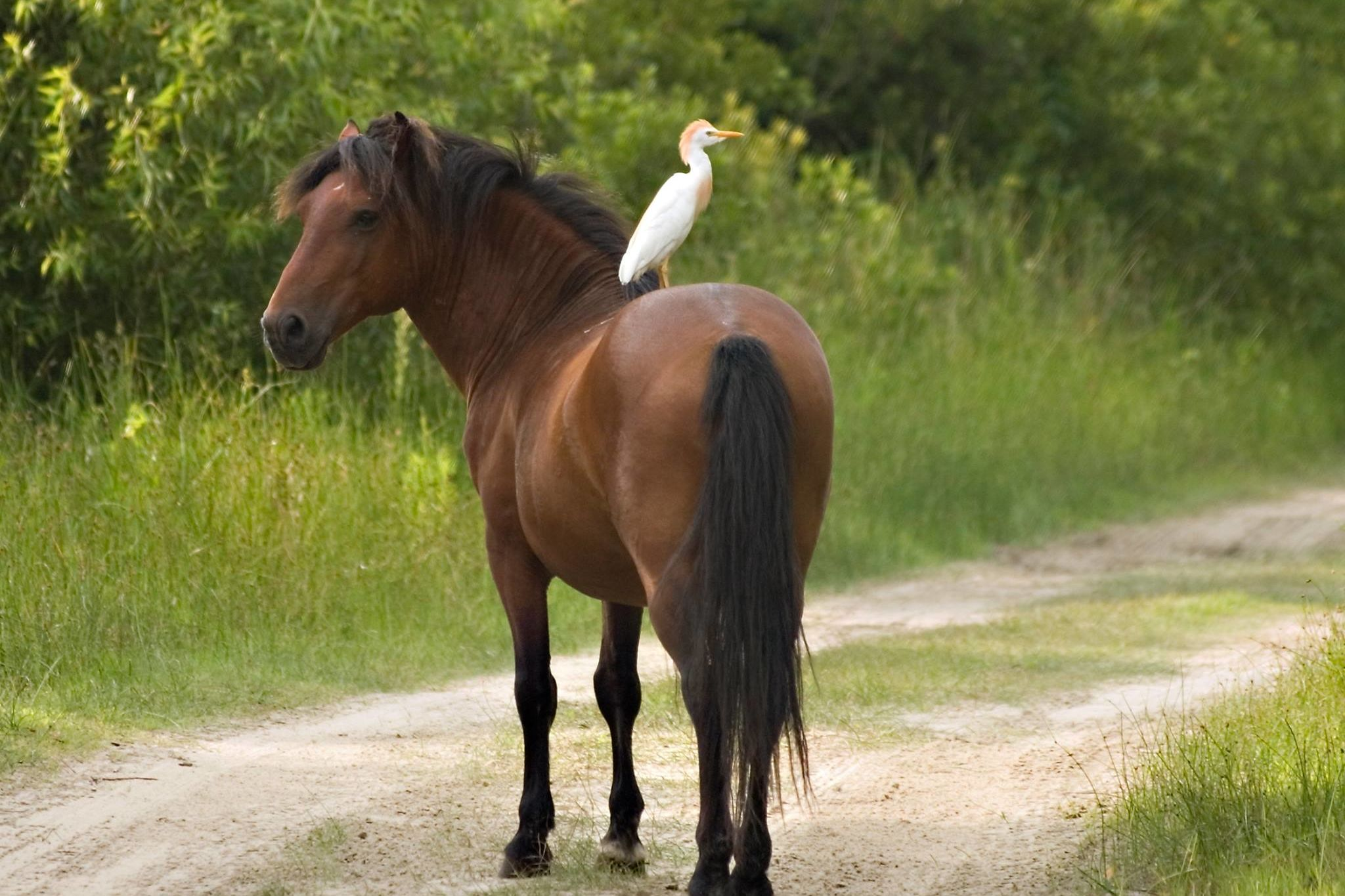 WATCH: There's a Very Good Explanation for This Wild Horse-Riding Bird, Thank You Very Much