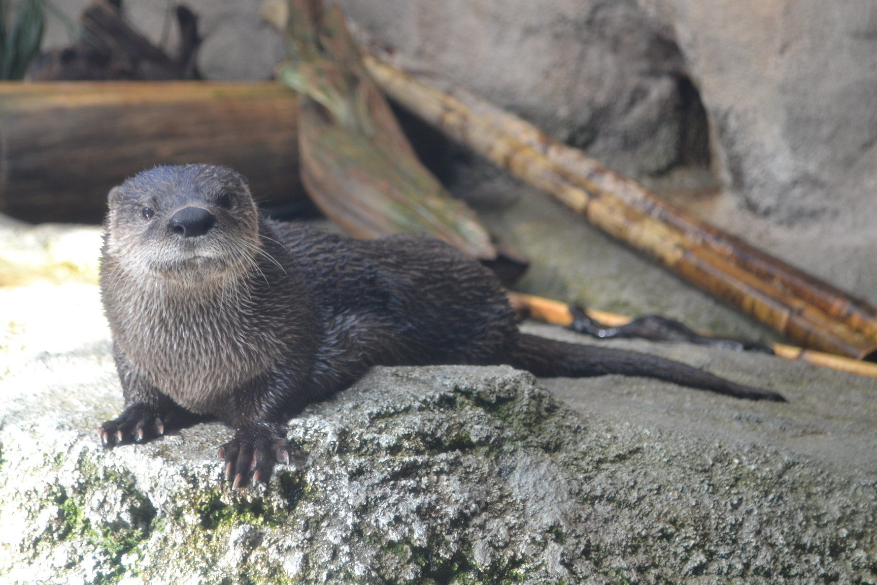 North Carolina Aquarium Mourns Loss of Famous River Otter