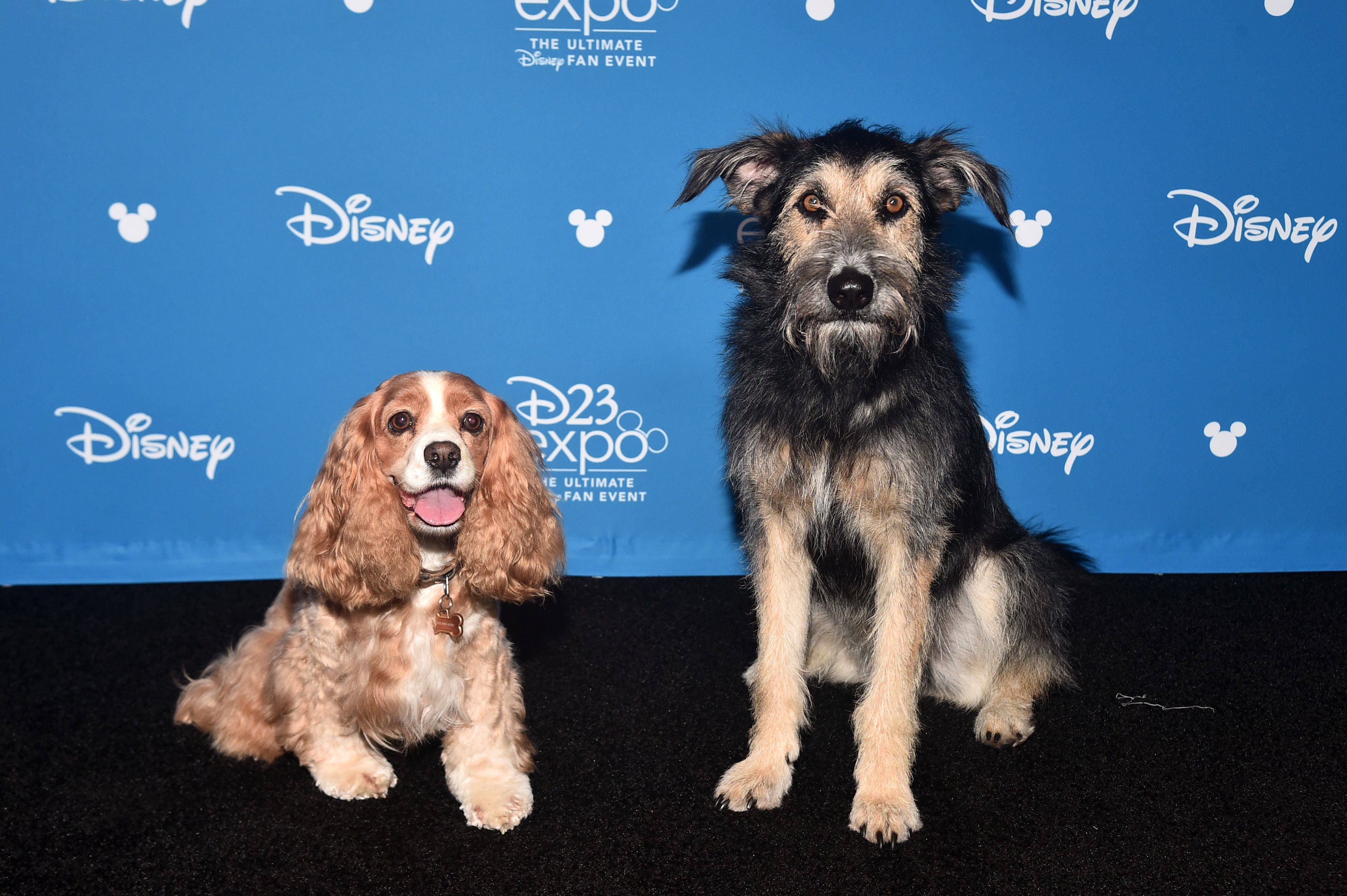 A Real Life Rescue Dog Was Chosen to Star in Disney's Lady and the Tramp