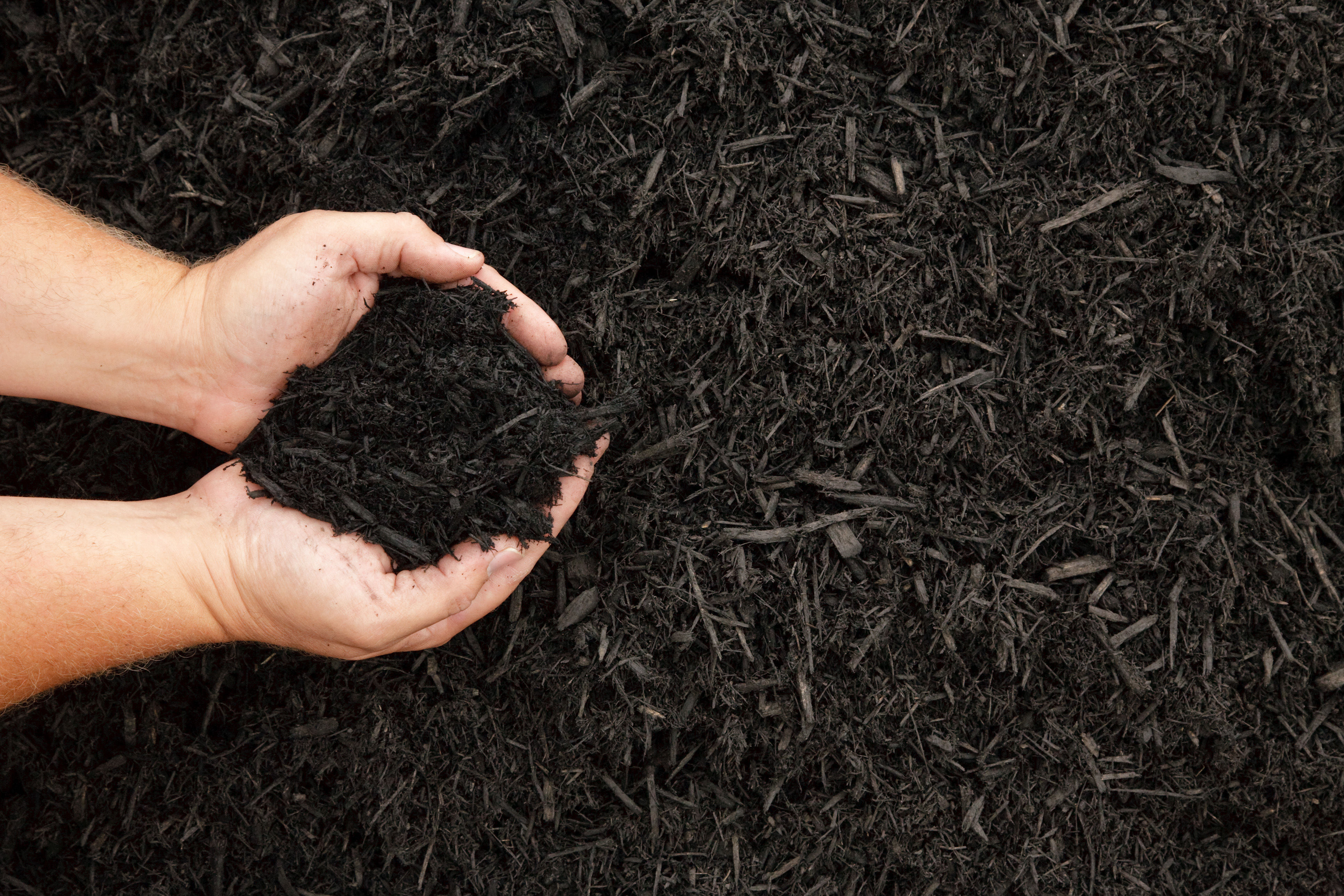 Here's Where You Can Get Free Mulch for Your Garden