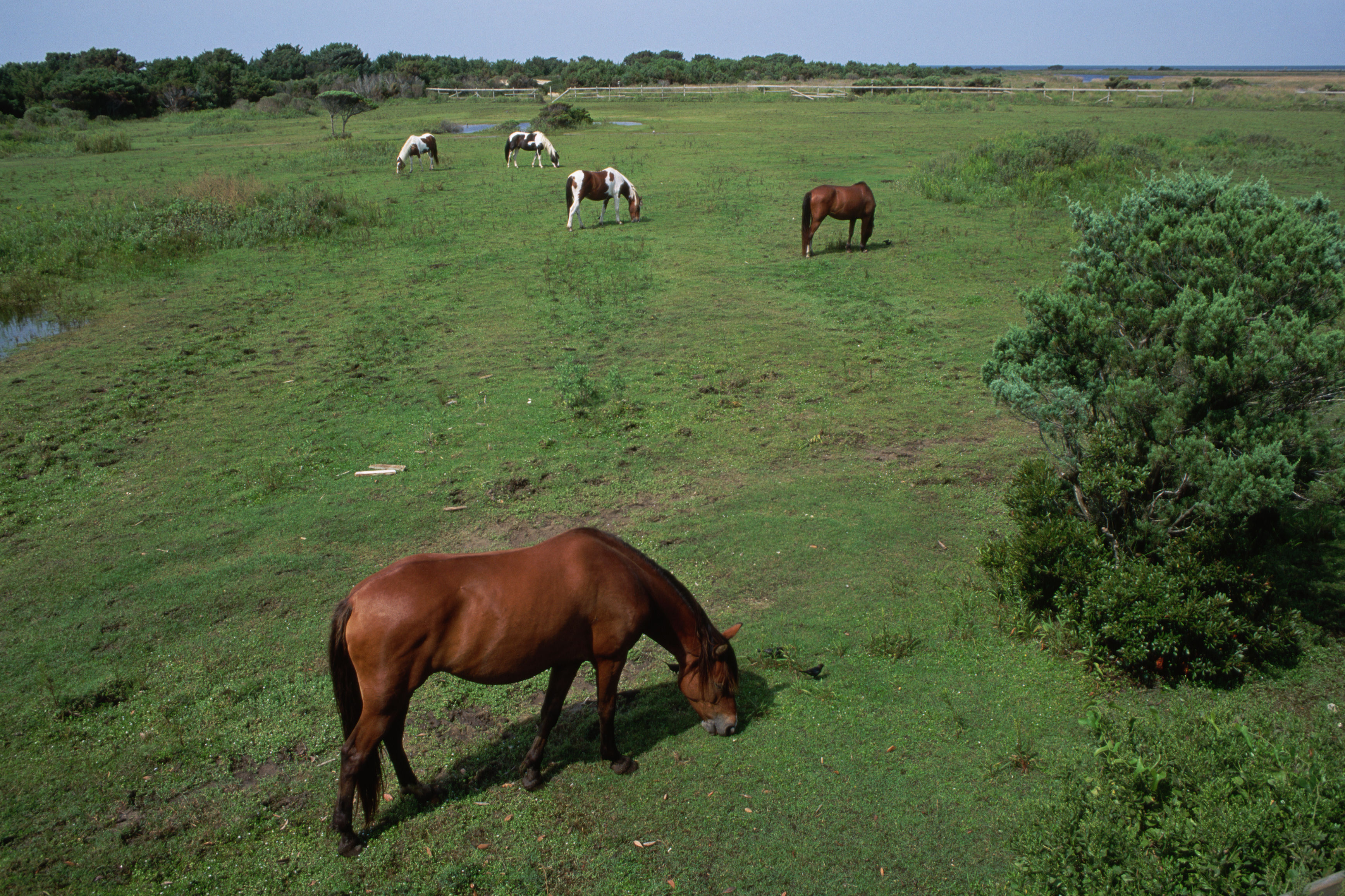 Meet the Outer Banks' Most Unique Wild Horse
