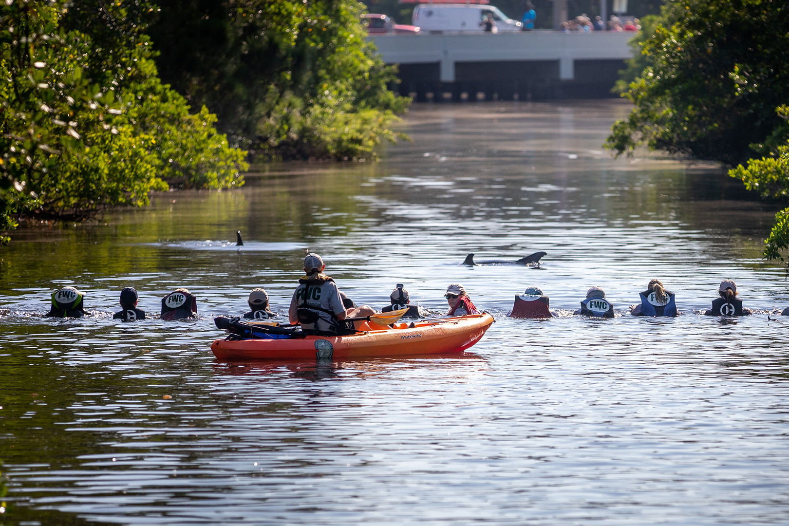 Human Chain Guides Scared Dolphins out of Florida Canal and Back to the Ocean