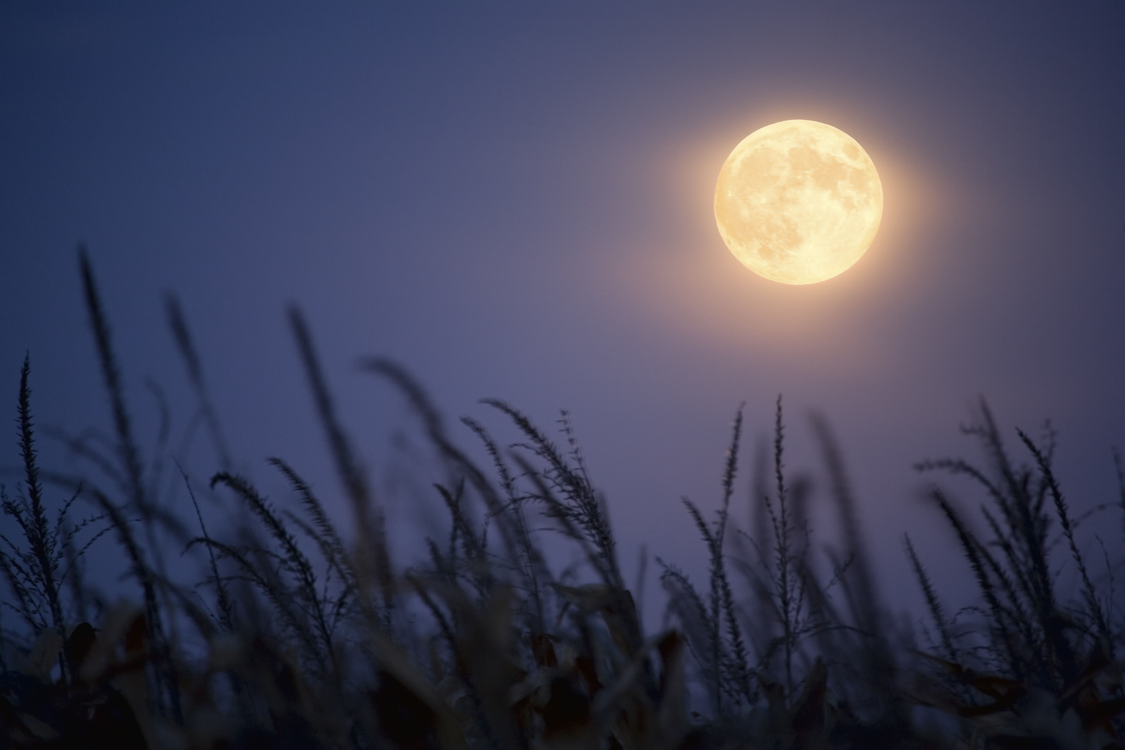 Eyes to the Sky Y'all: A Rare Harvest Micromoon Is Happening on Friday the 13th