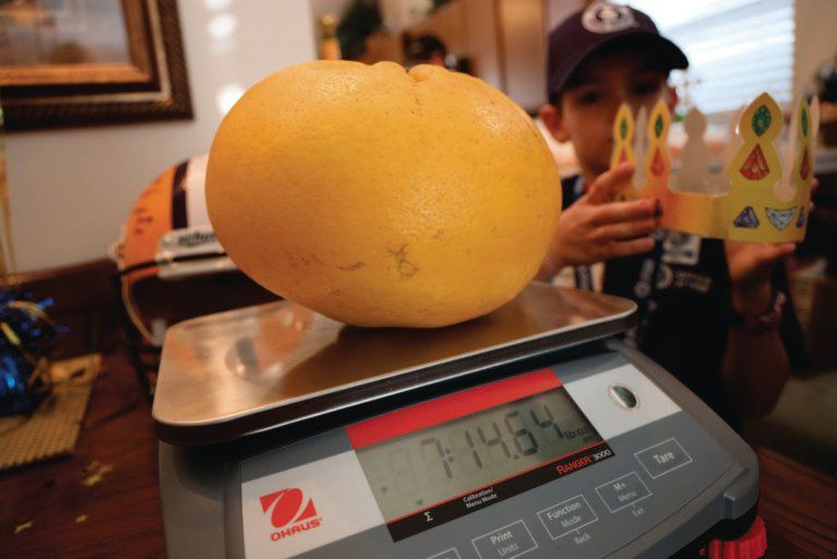 A Louisiana Couple Just Set Two Guinness World Records With One Massive Grapefruit