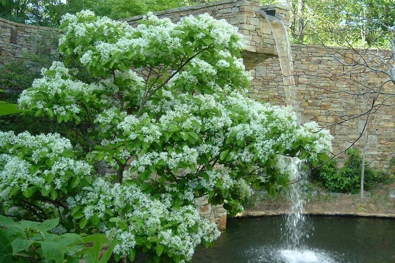 5 Great Trees For Small Spaces - Southern Living