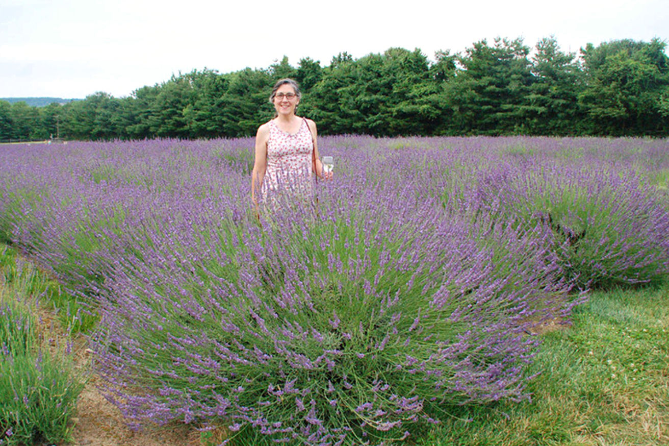 A REAL Lavender for the South! Sweet!