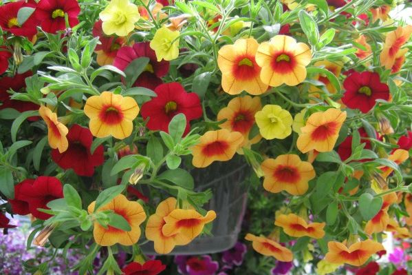 Three Great Flowers To Plant Right Now