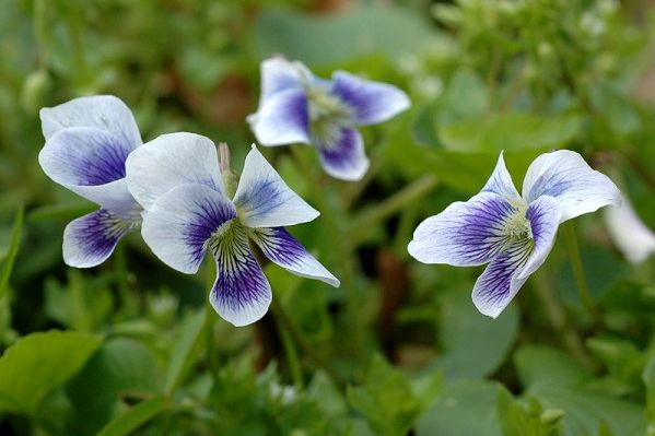 Who Wants to Kill Violets?