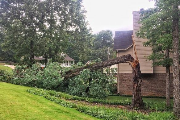 Why Your Tree Fell Down