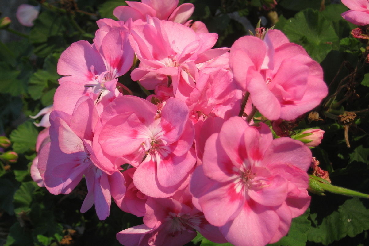 Make Your Annual Flowers Perennials