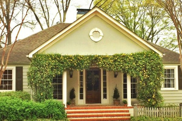 Vines To Purty Up Your House