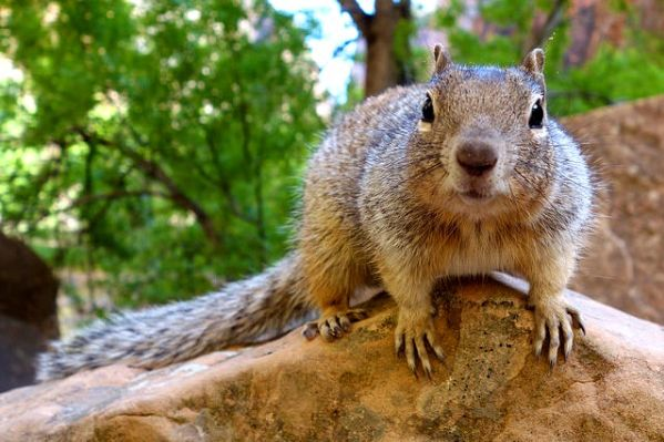 No Acorns Means No Squirrels -- I'm Good With That