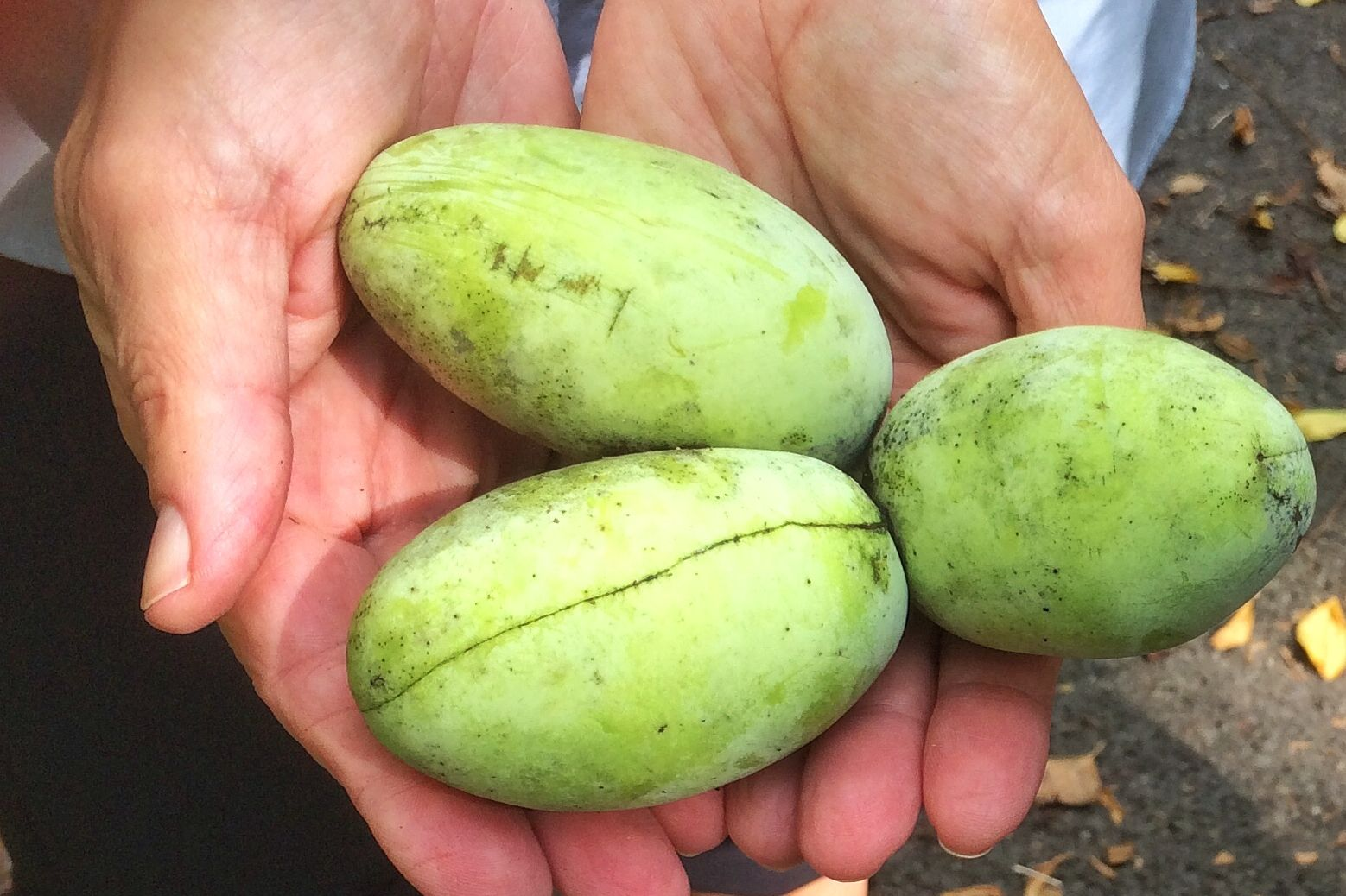 Ever Pick A Pawpaw?