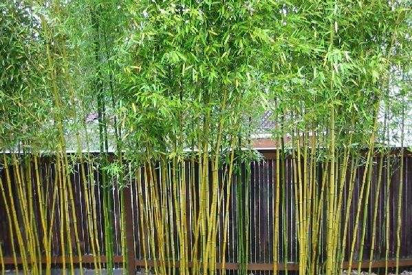 How To Kill Bamboo