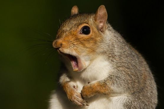 7 Things You Must Know About Stupid Squirrels