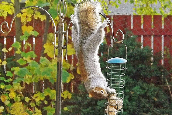 Don't Feed Stinking Squirrels!