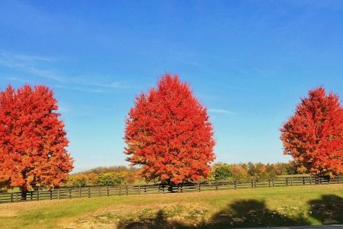 Why I Hate Fall by Judy Bender