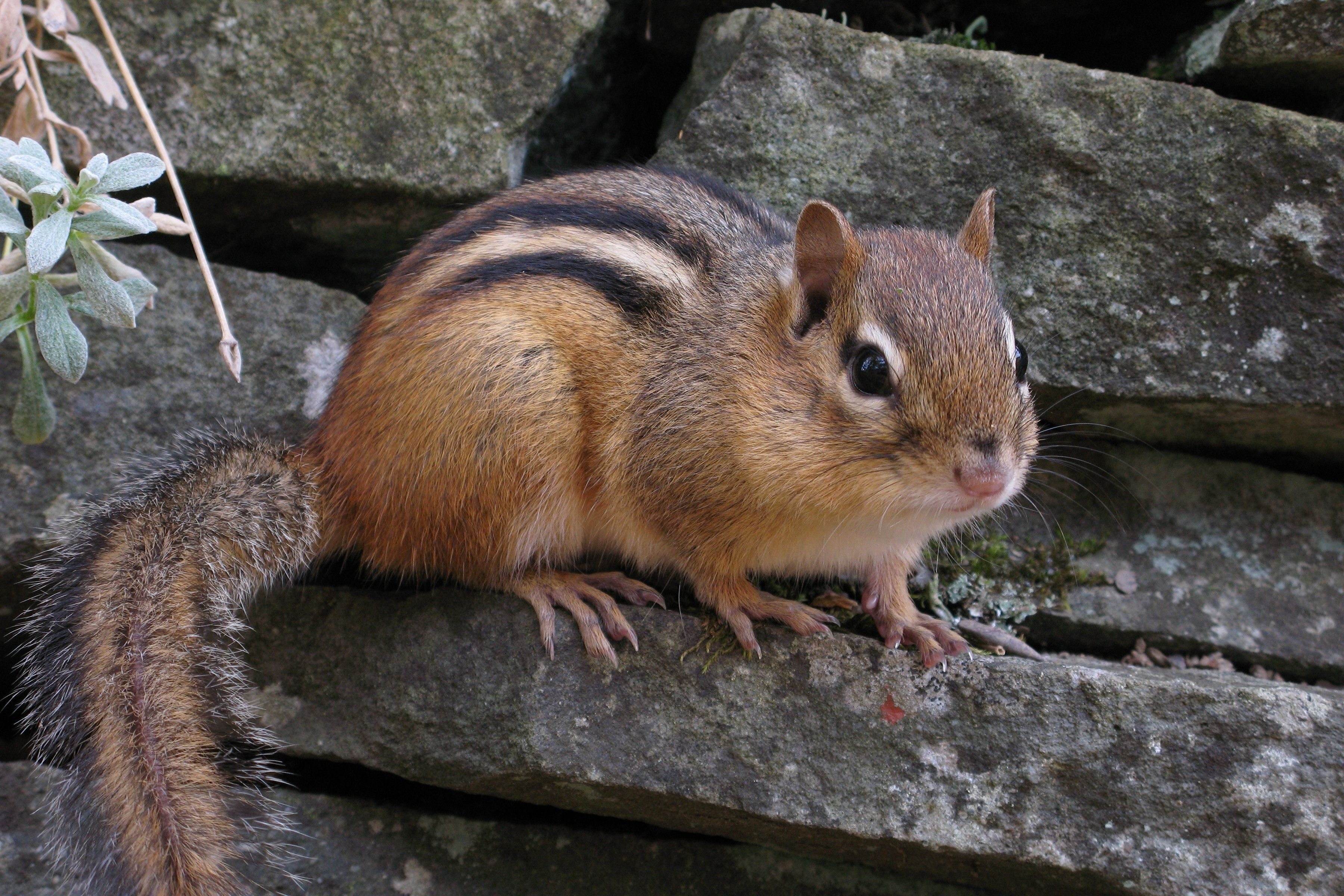 Take My Chipmunks -- Please!
